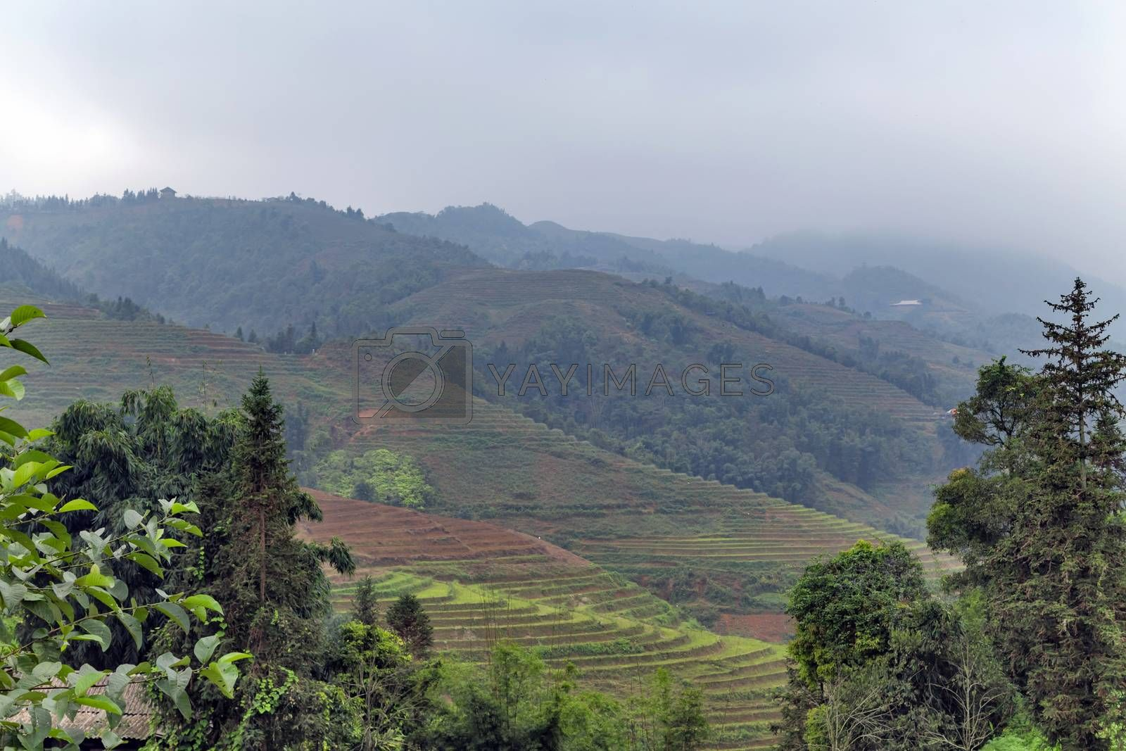 Cat Cat village Sapa Lao Cai Province north-west Vietnam view of Terraced rice field mist mountain