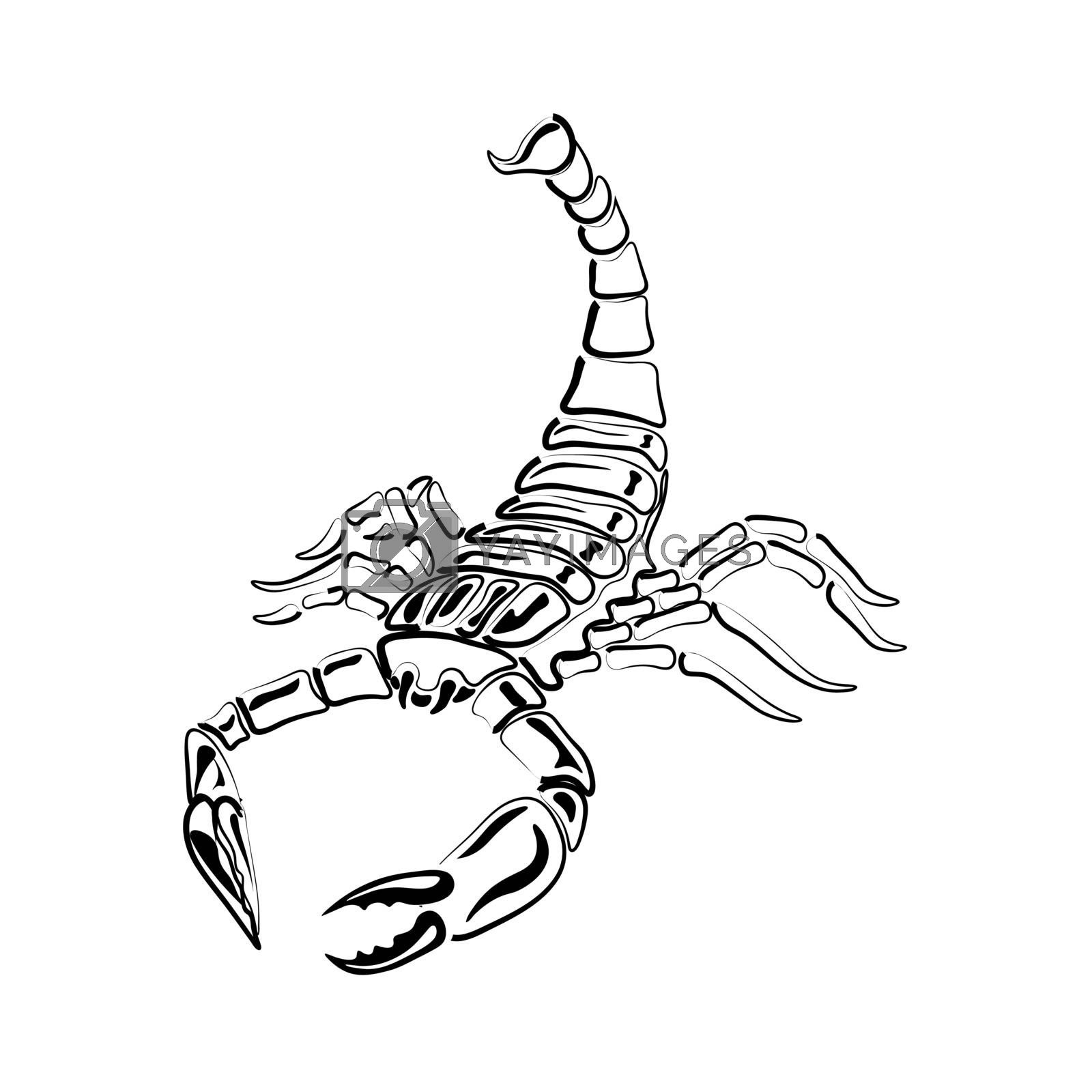Black and white Scorpion for tattoos, zodiac sign by lilystudio