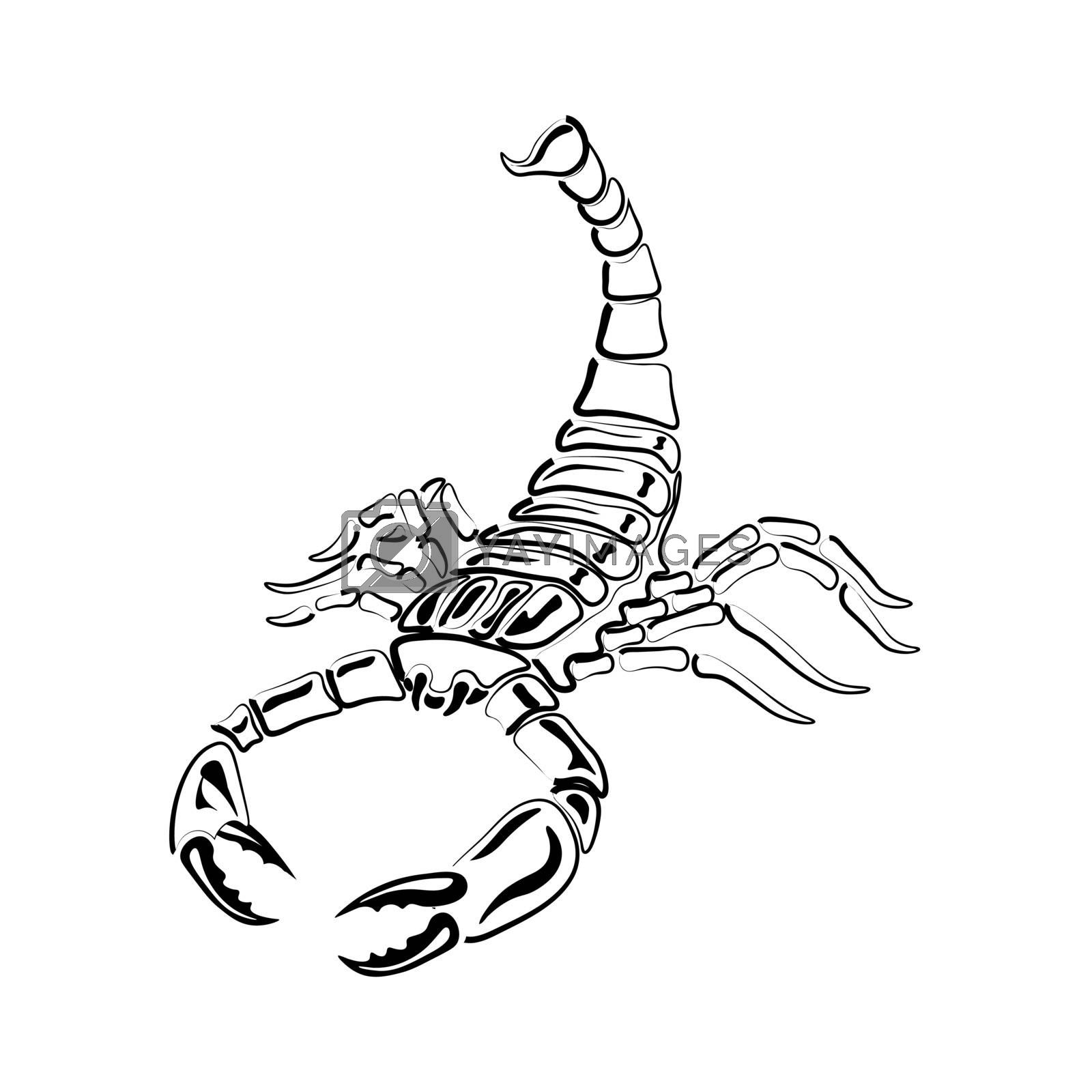 Aggressive black and white Scorpion for tattoos, zodiac sign. Made with a predominance of white. Vector illustration