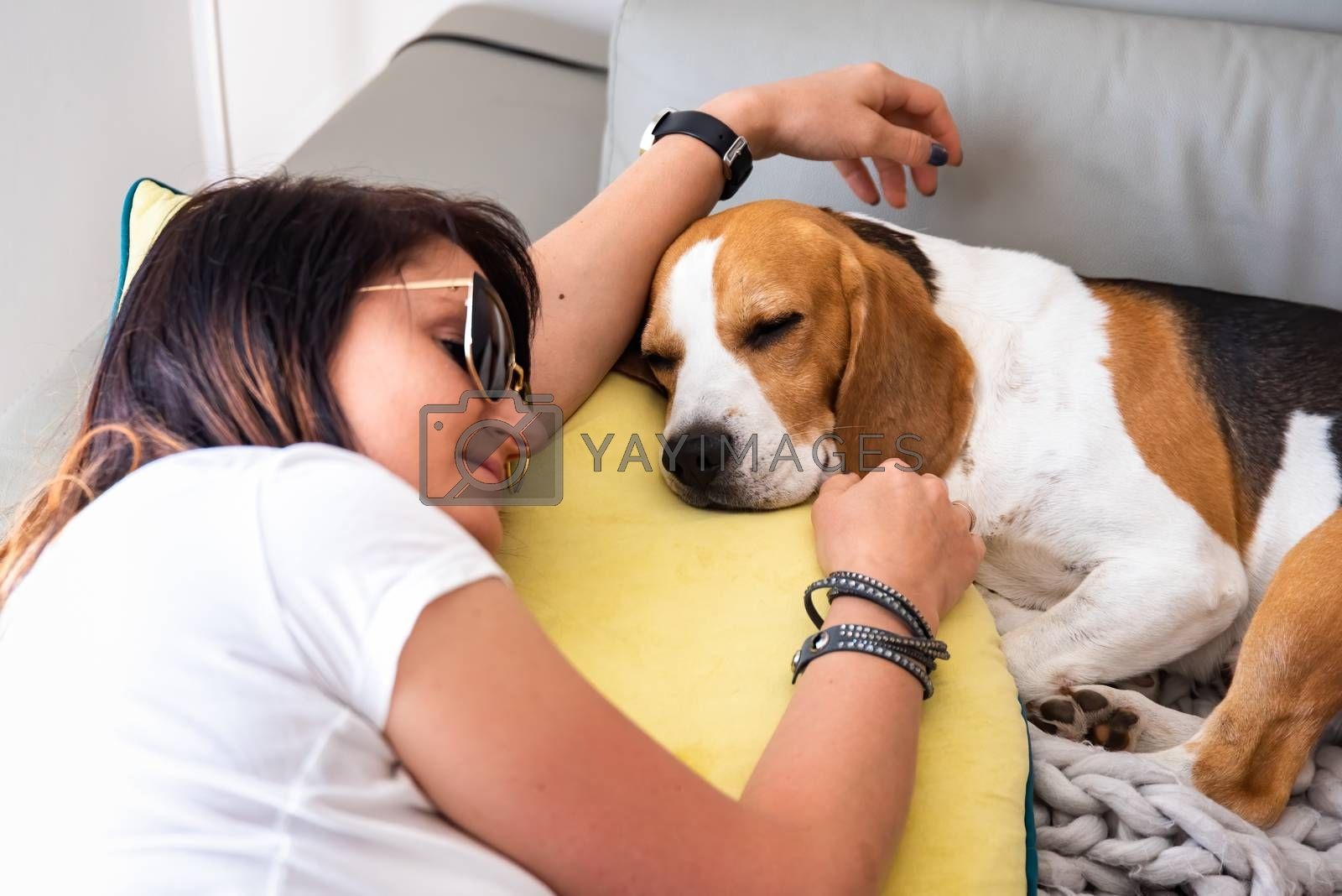 Beagle dog sleeping next to womanon sofa. Pets with people friendship.