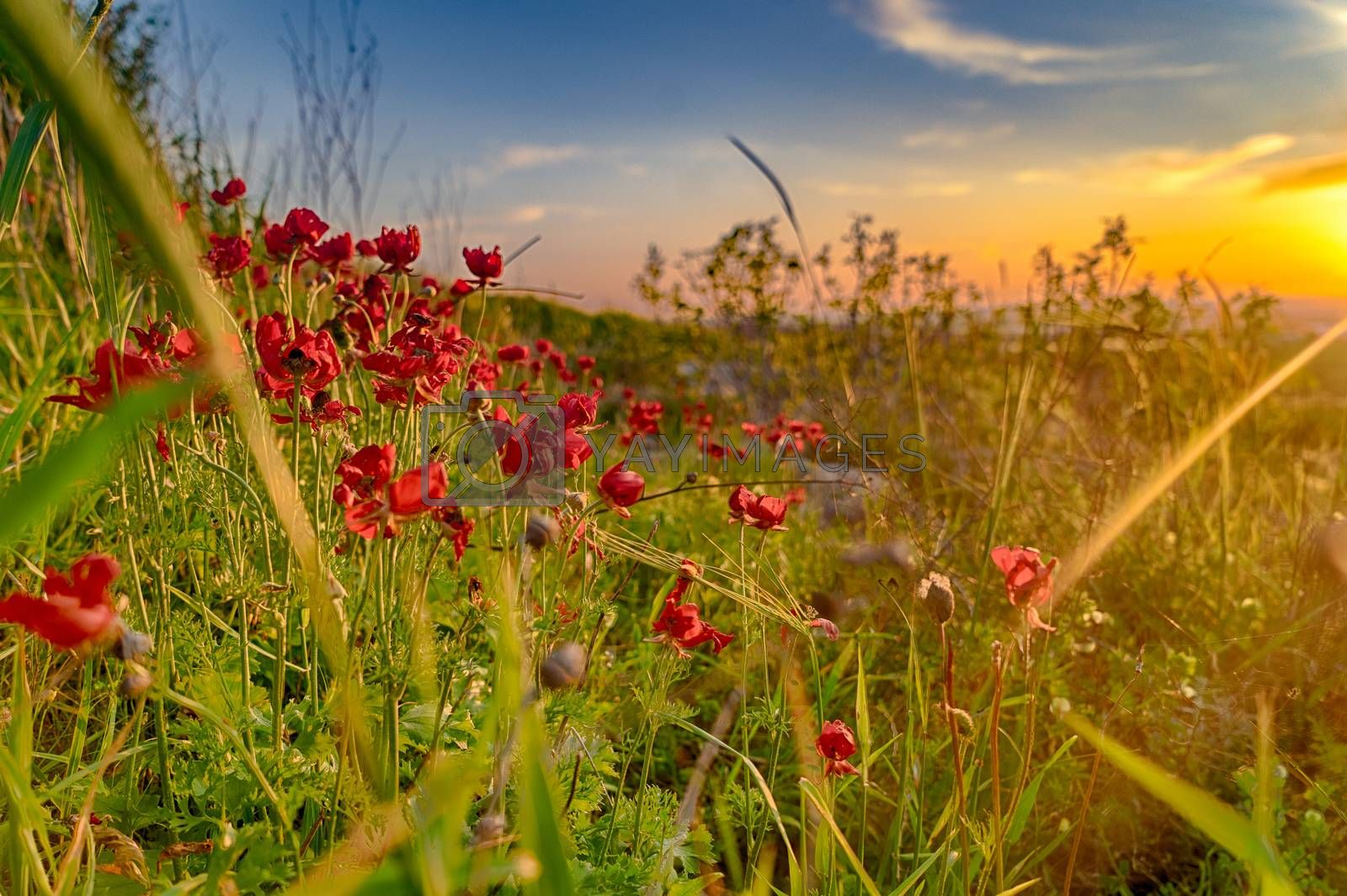 Spring sunset in nature landscape view by javax