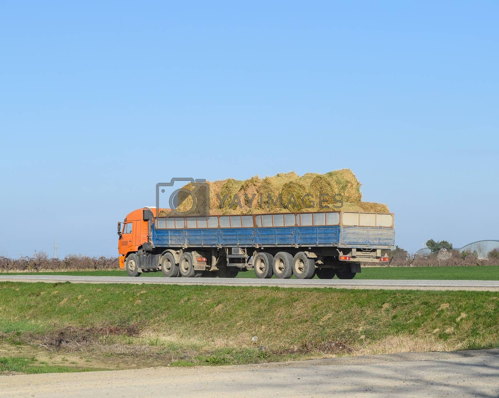 Truck carrying hay in his body. Making hay for the winter