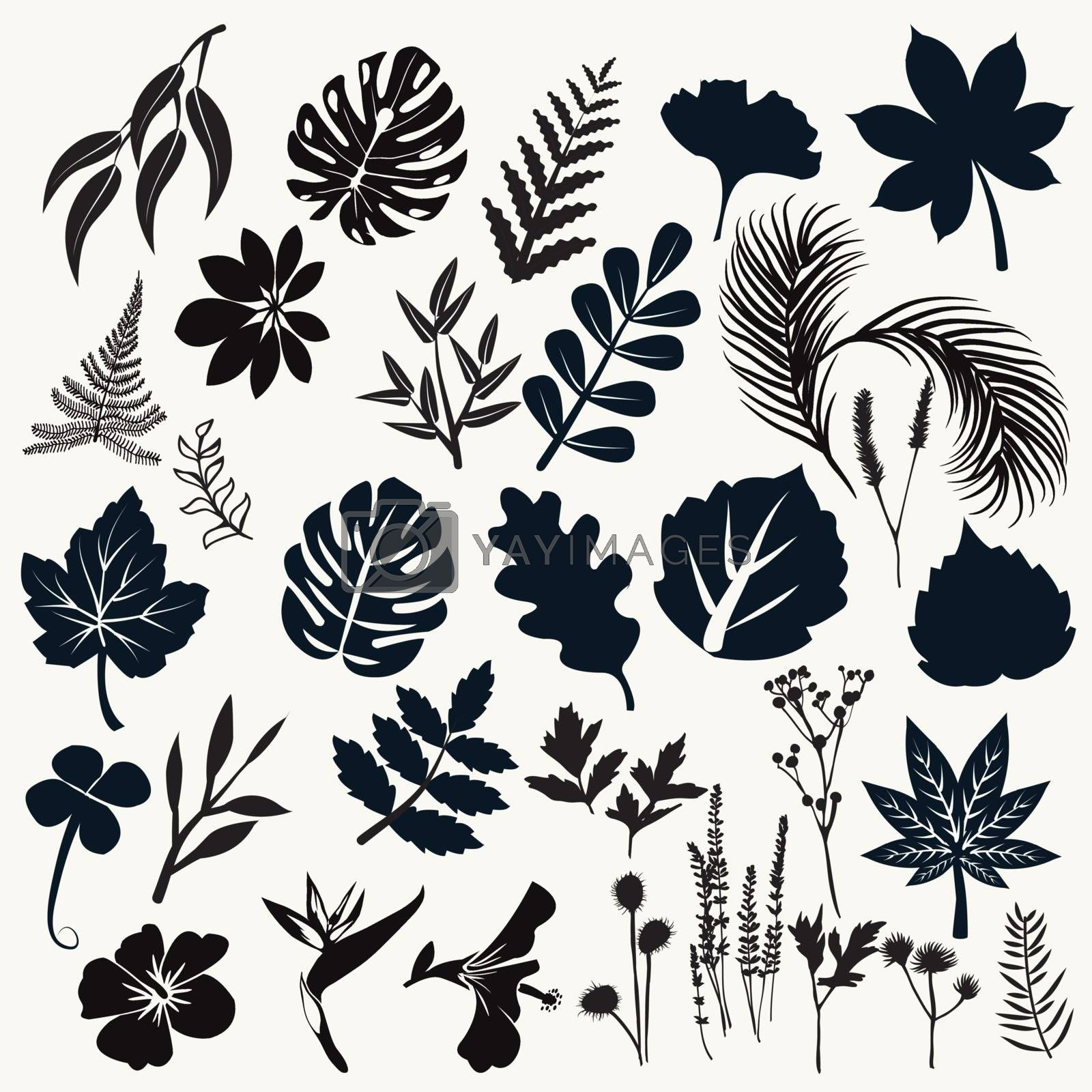 Vector collection silhouette of leaves and flowers. Set of  botanical symbol black color design elements.