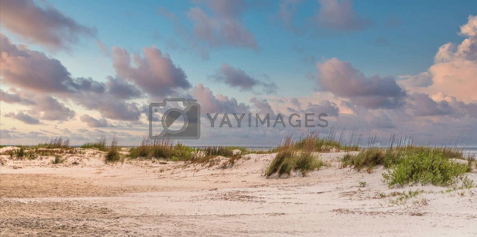 Sea Oats and beach grasses on a small dune