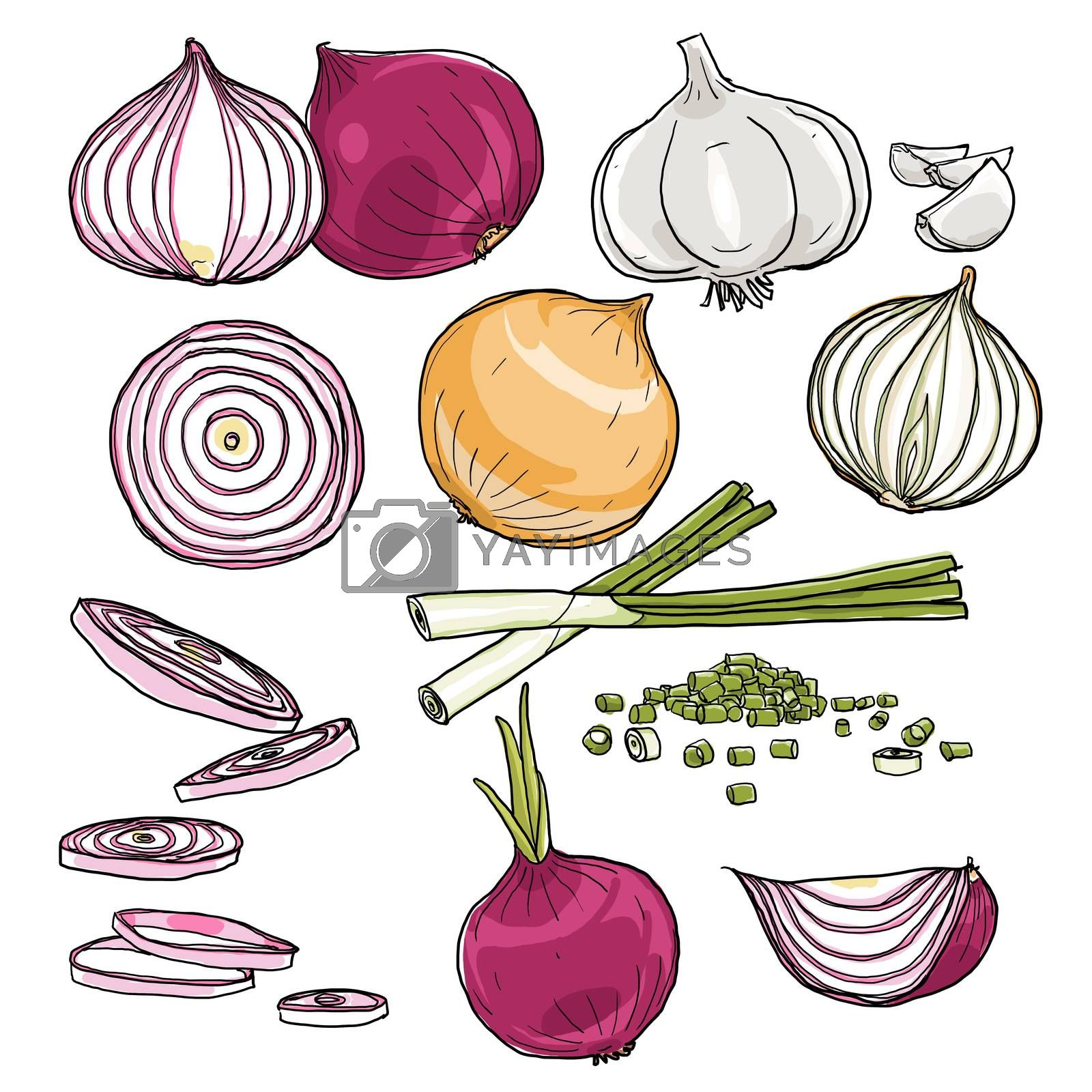 onion  set of  hand drawn art painting illustration