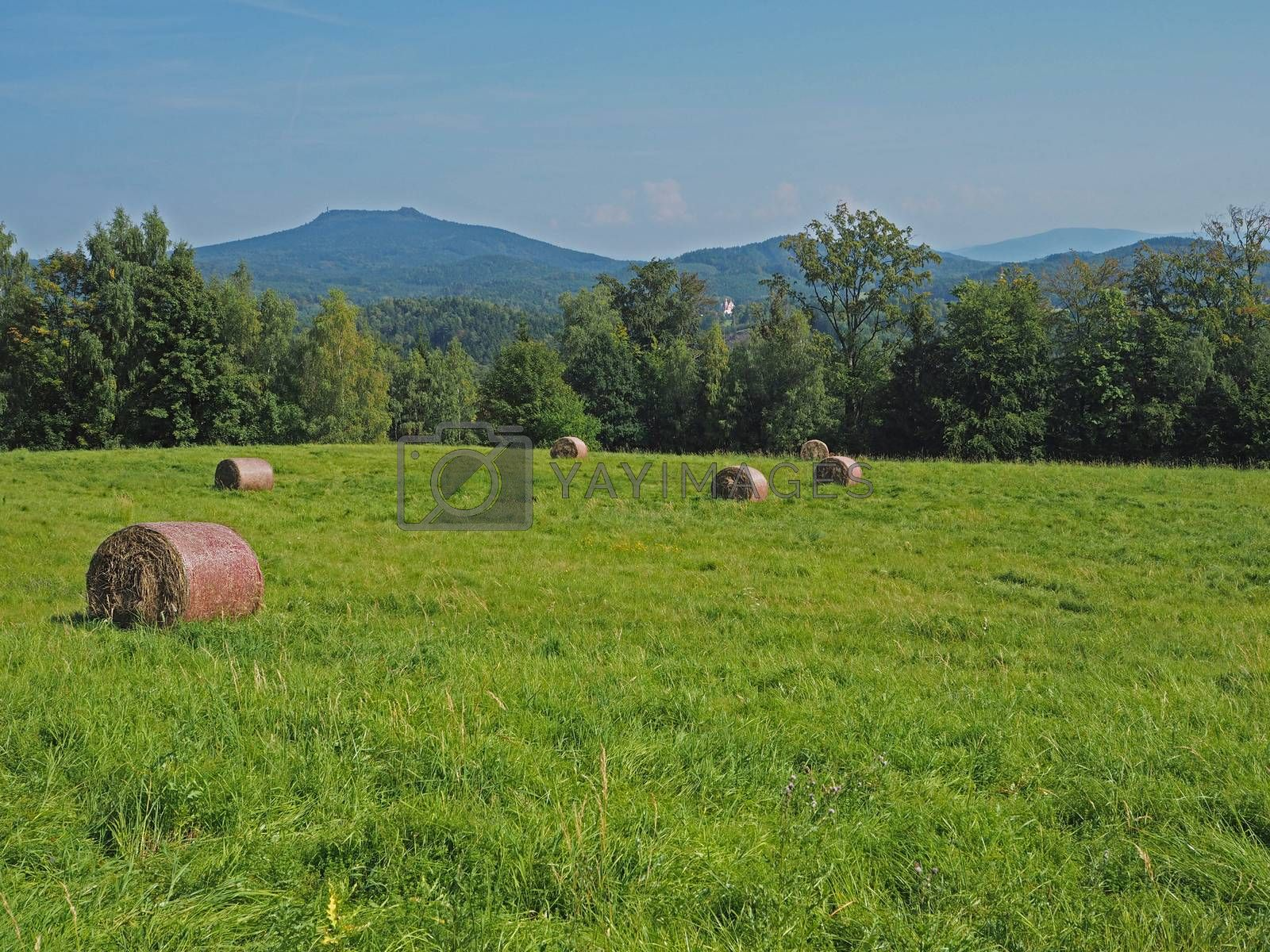 straw bale on green grass meadow with tree, hills and blue sky - summer idyllic landscape
