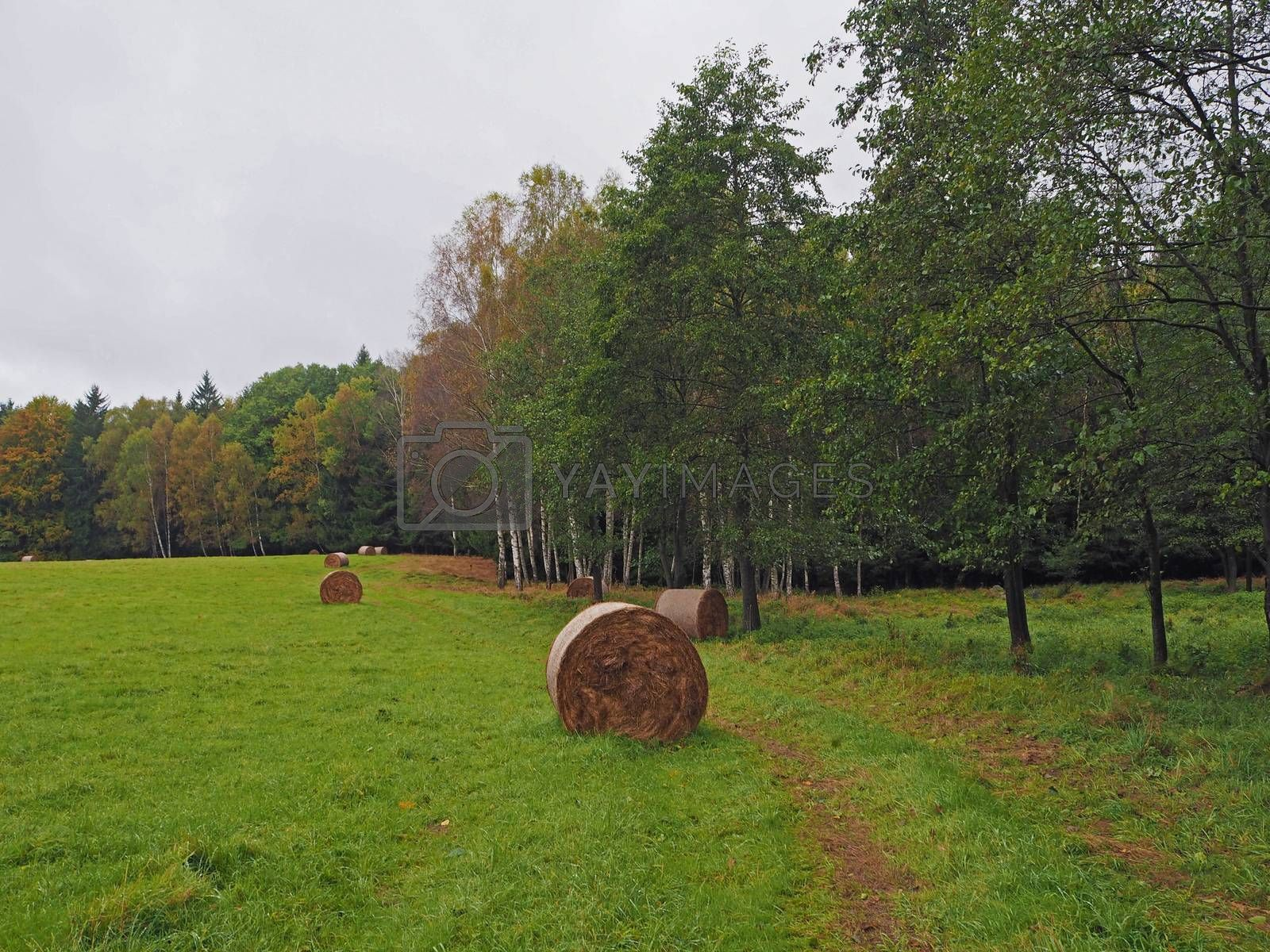straw bales on the autumn green meadow and colorful trees