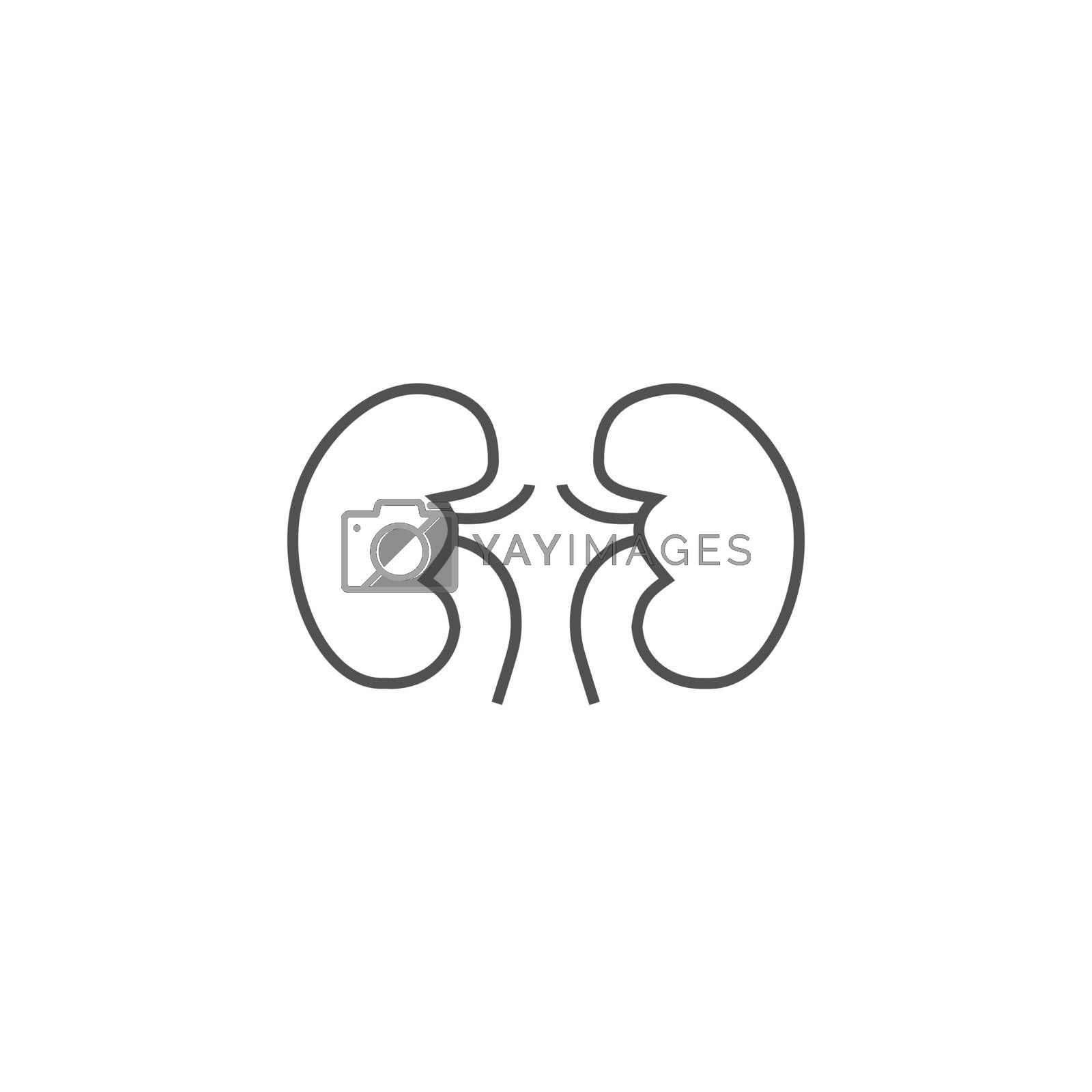 Kidneys Vector Line Icons by smoki