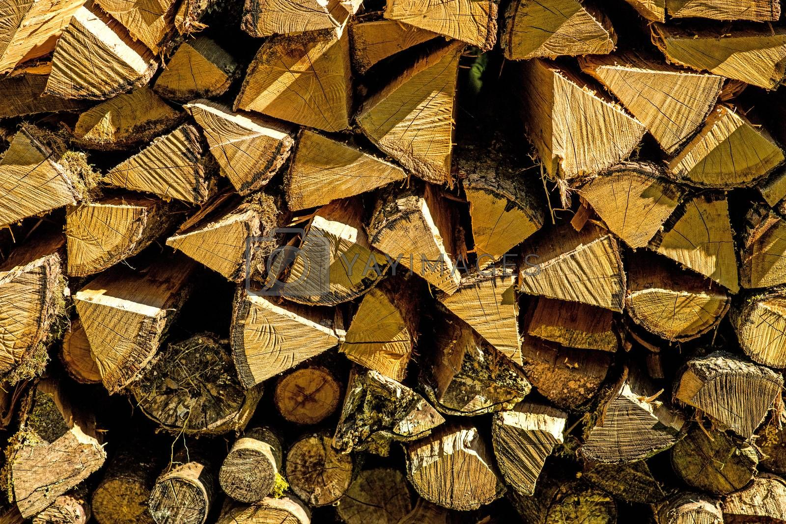 firewood, stack in a forest
