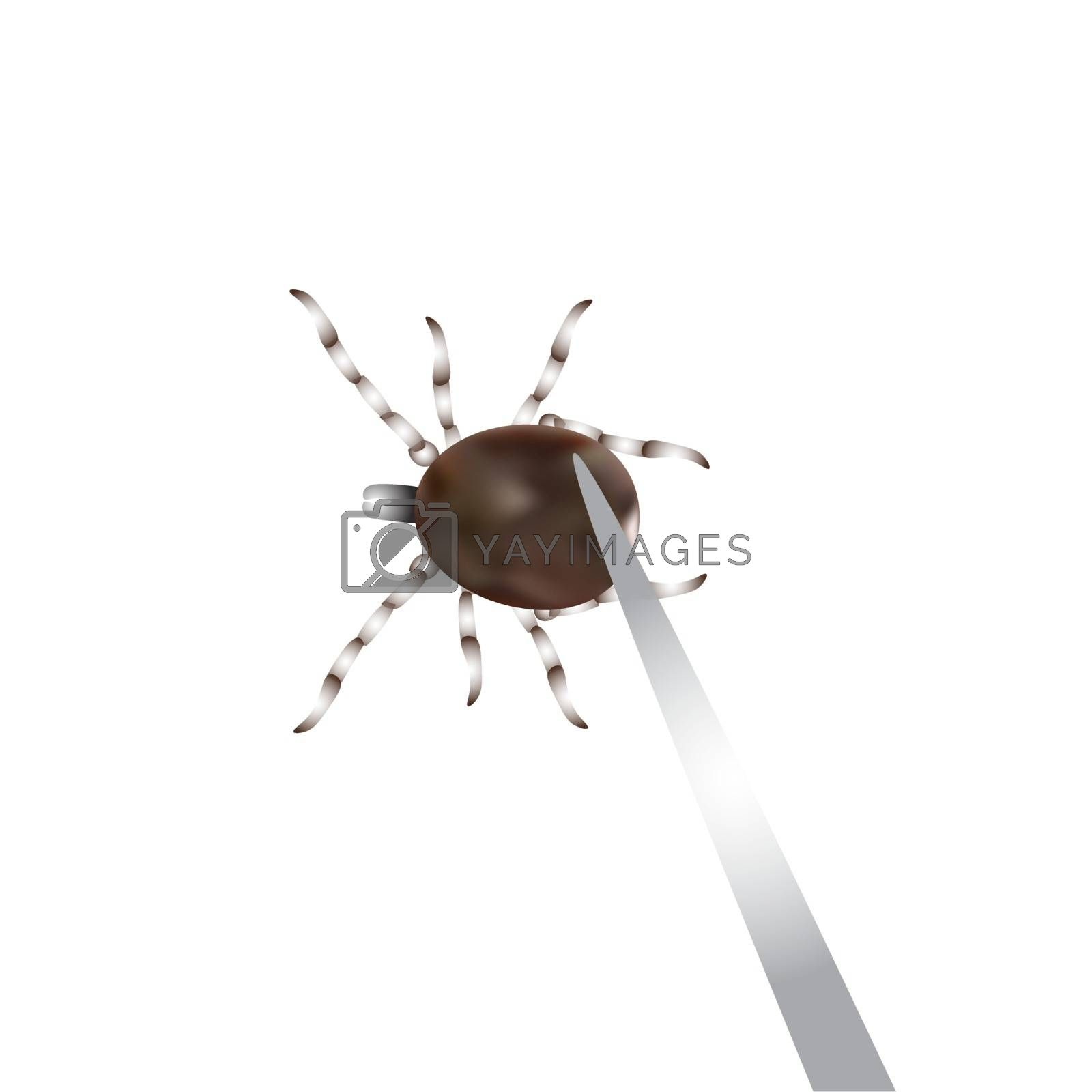 Remove mite with special tools. Spider mites. Mite parasites. Vector illustration