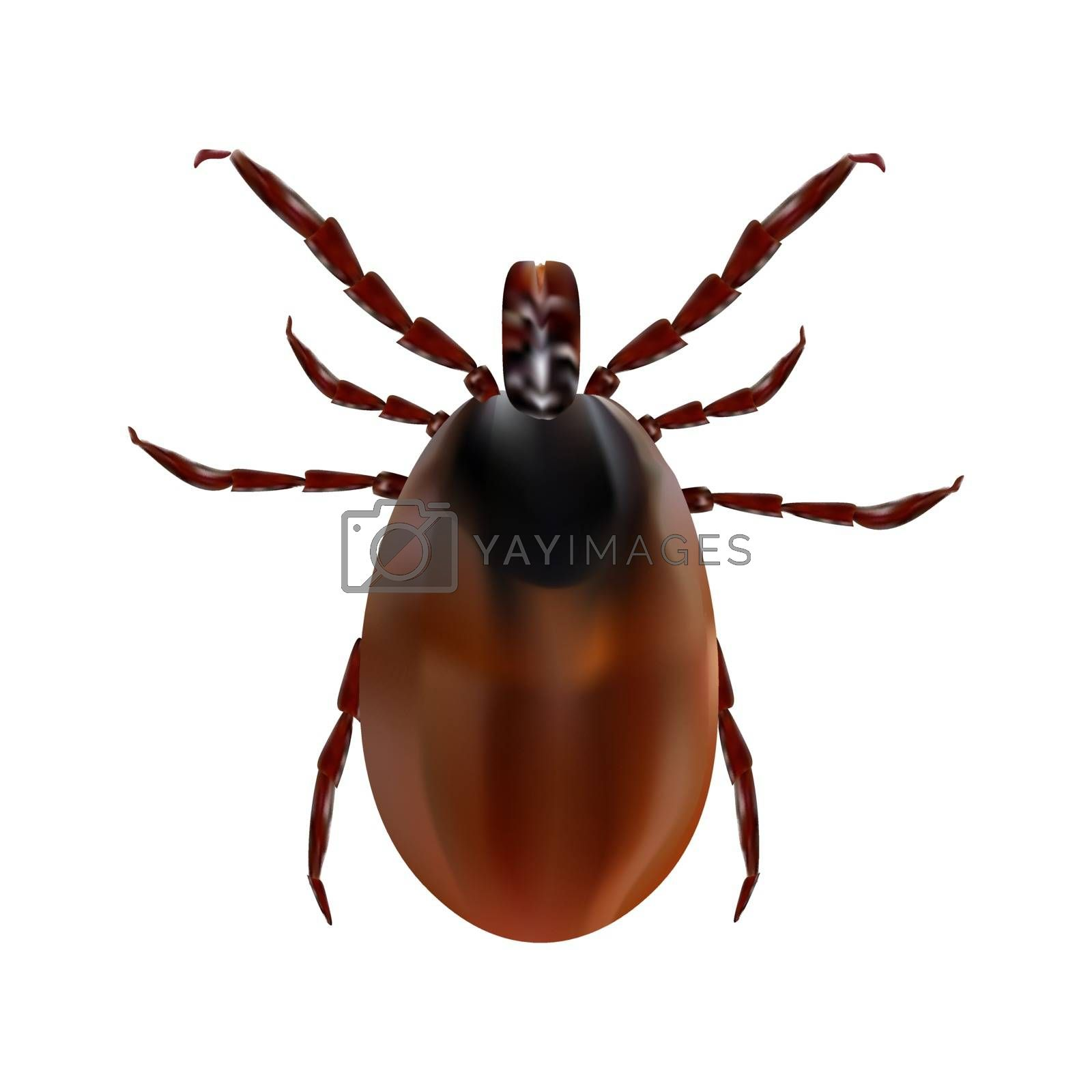Harvest bug on a white background. Vector illustration