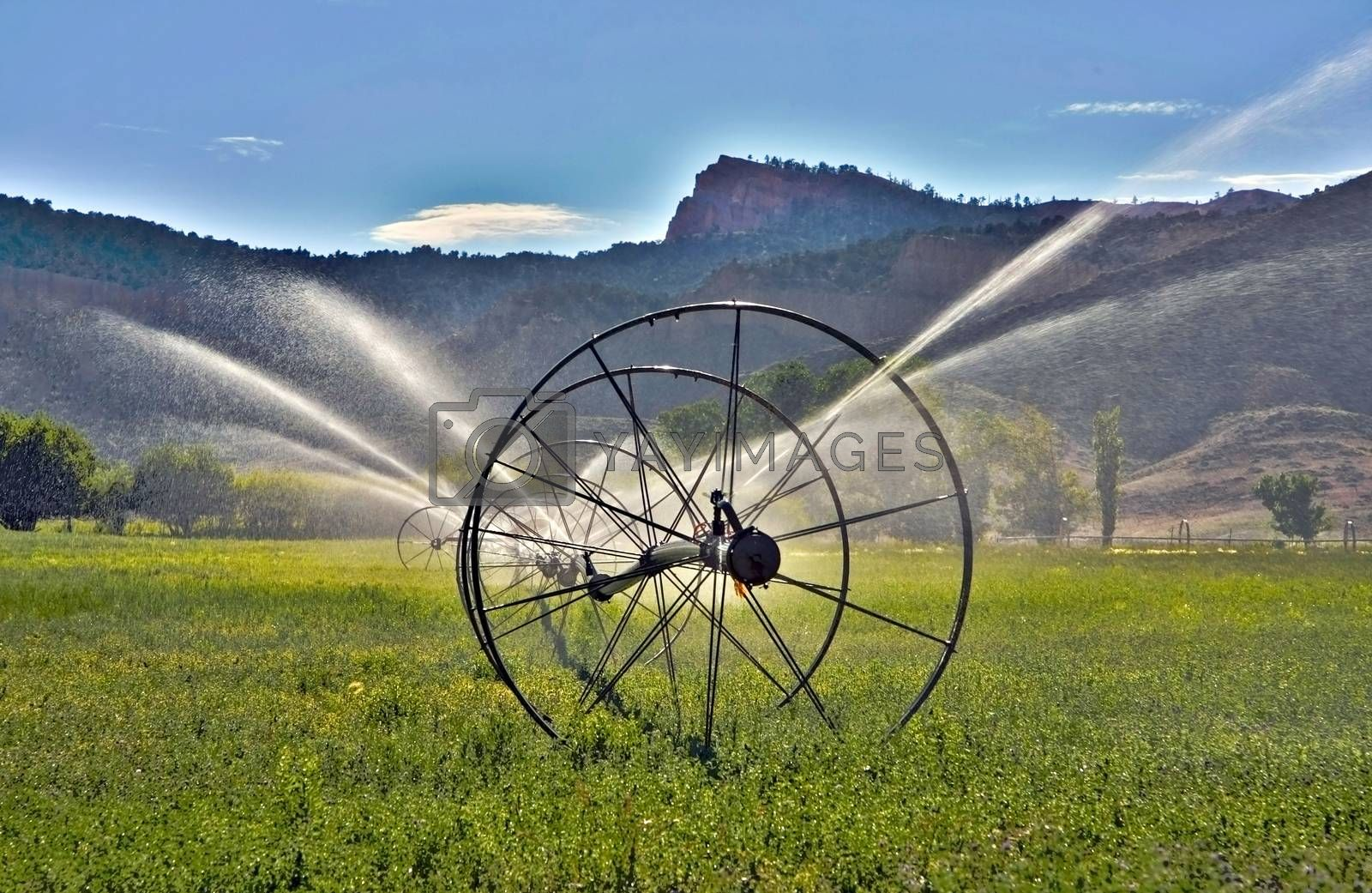 Irrigation System by applesstock