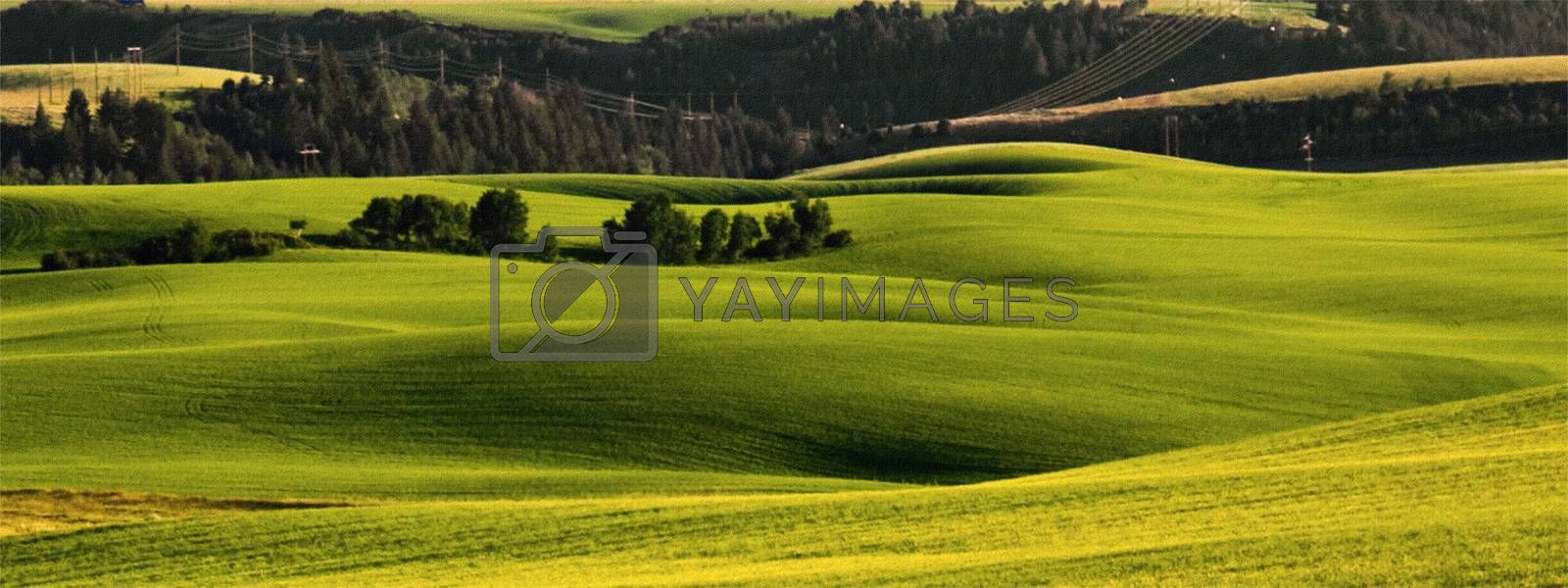 Green and Amber Fields and Gentle Rolling Hills