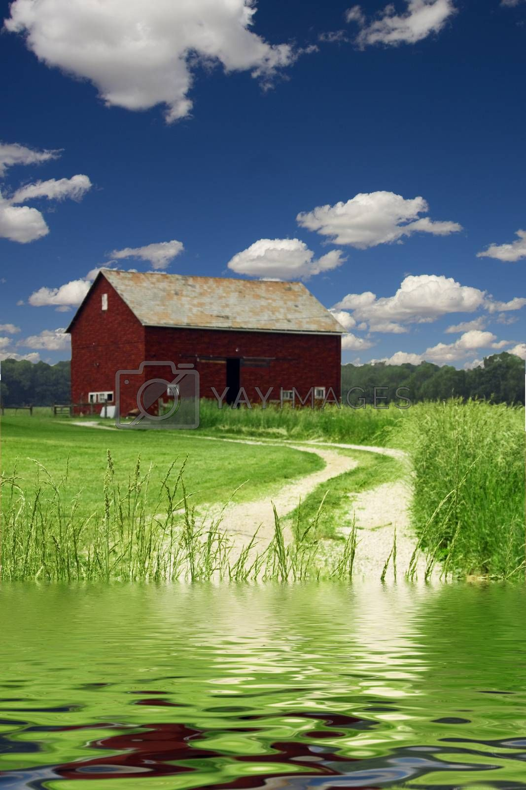 Red Barn in field of wheat. River or lakeshore