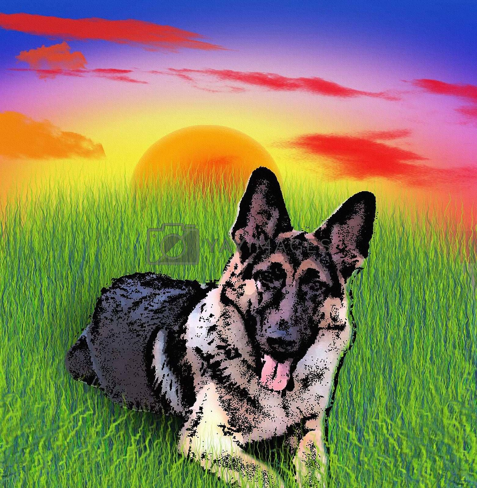 German Shepherd by applesstock