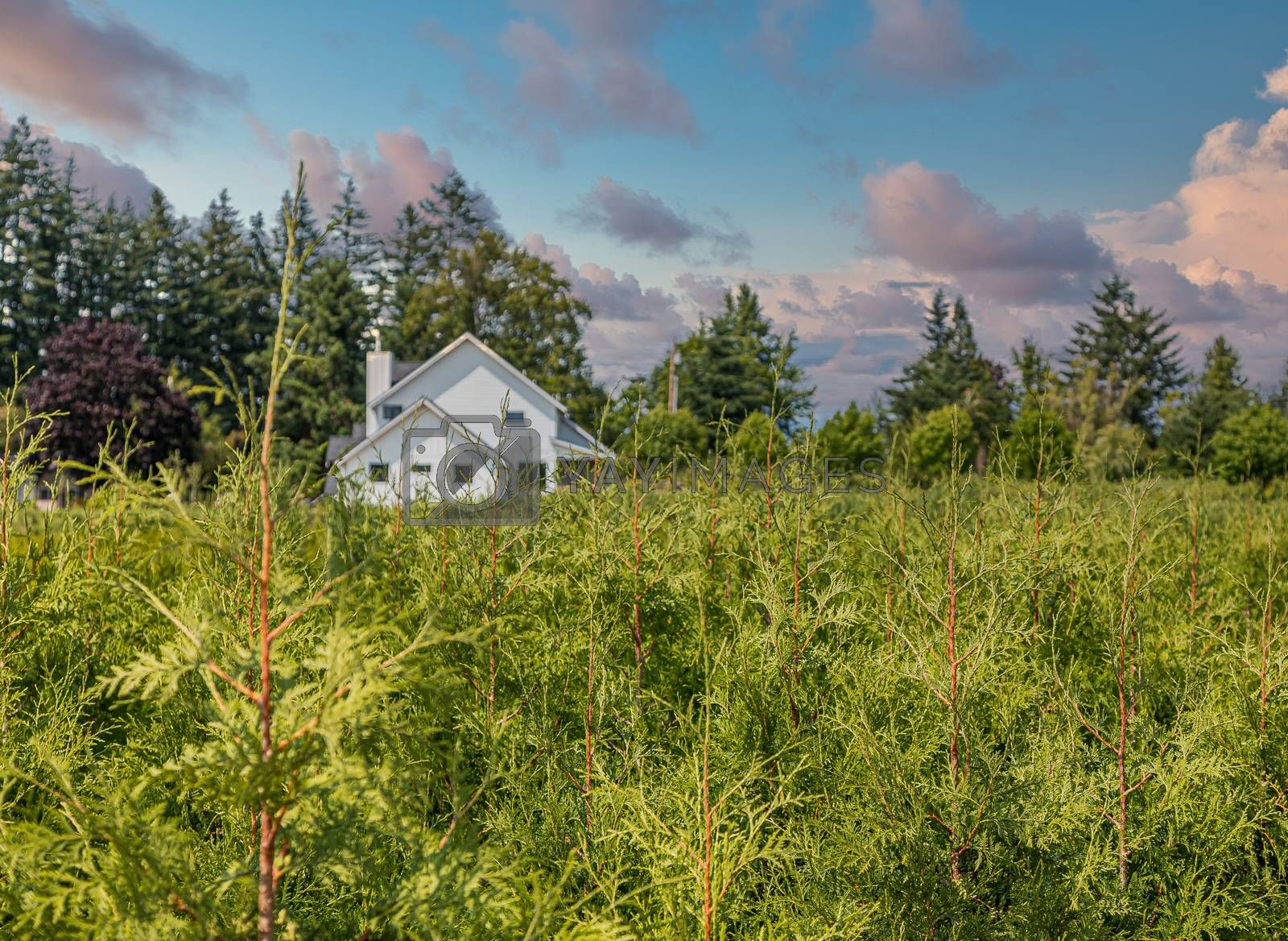 A White House Past Juniper Farm in the Pacific Northwest