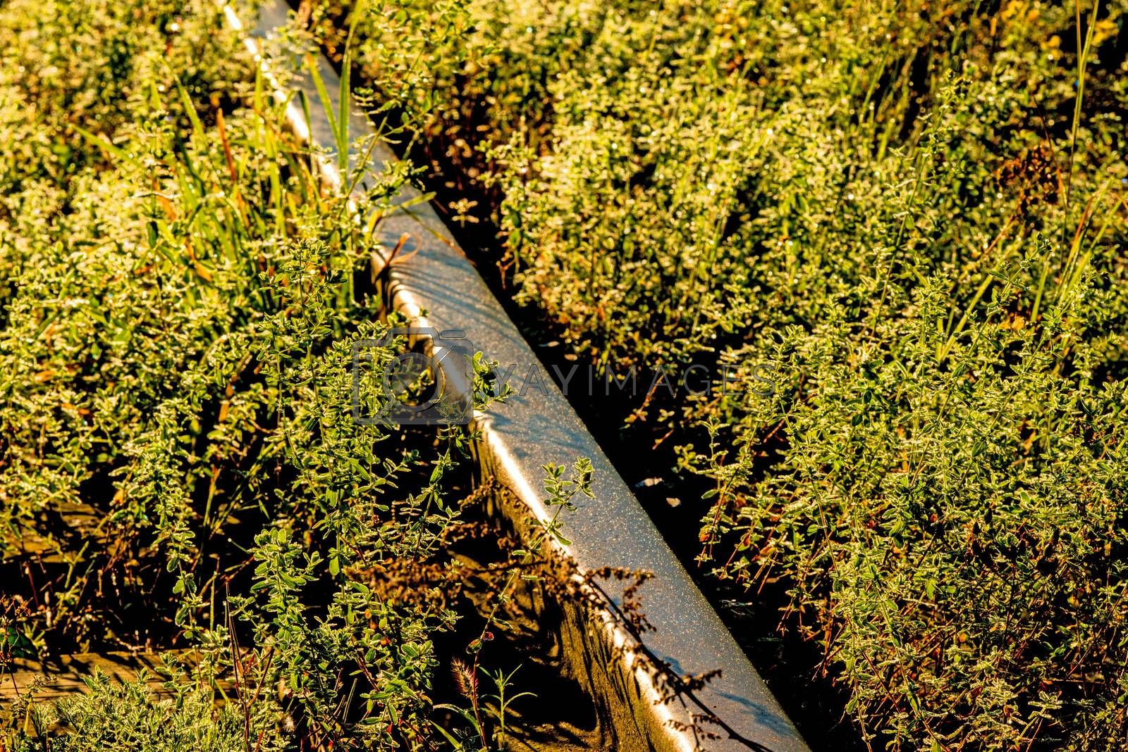 old rails in soft autumnal morning sun by bremse