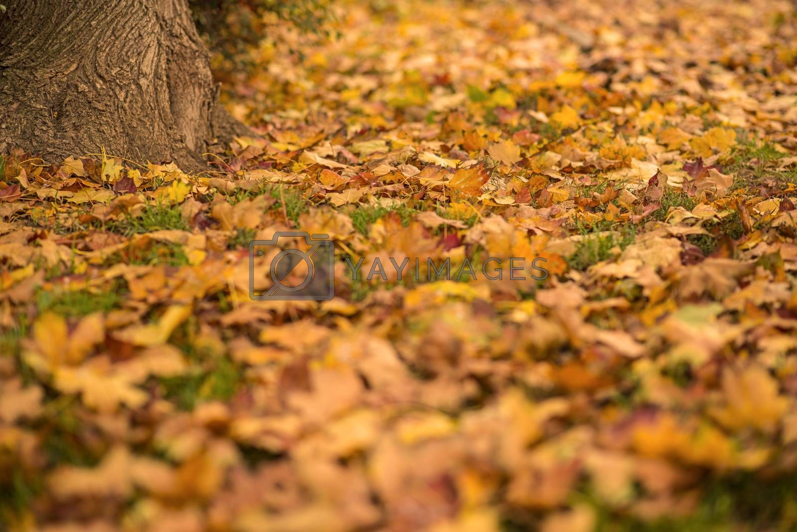 autumnal painted leaves by bremse