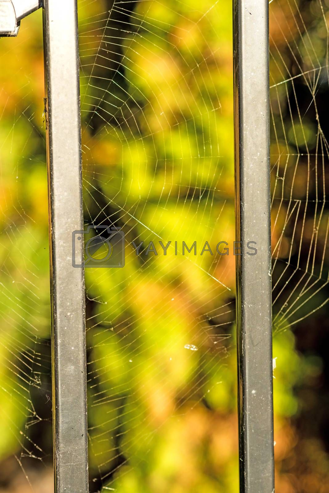 Spider web at a fence by Jochen