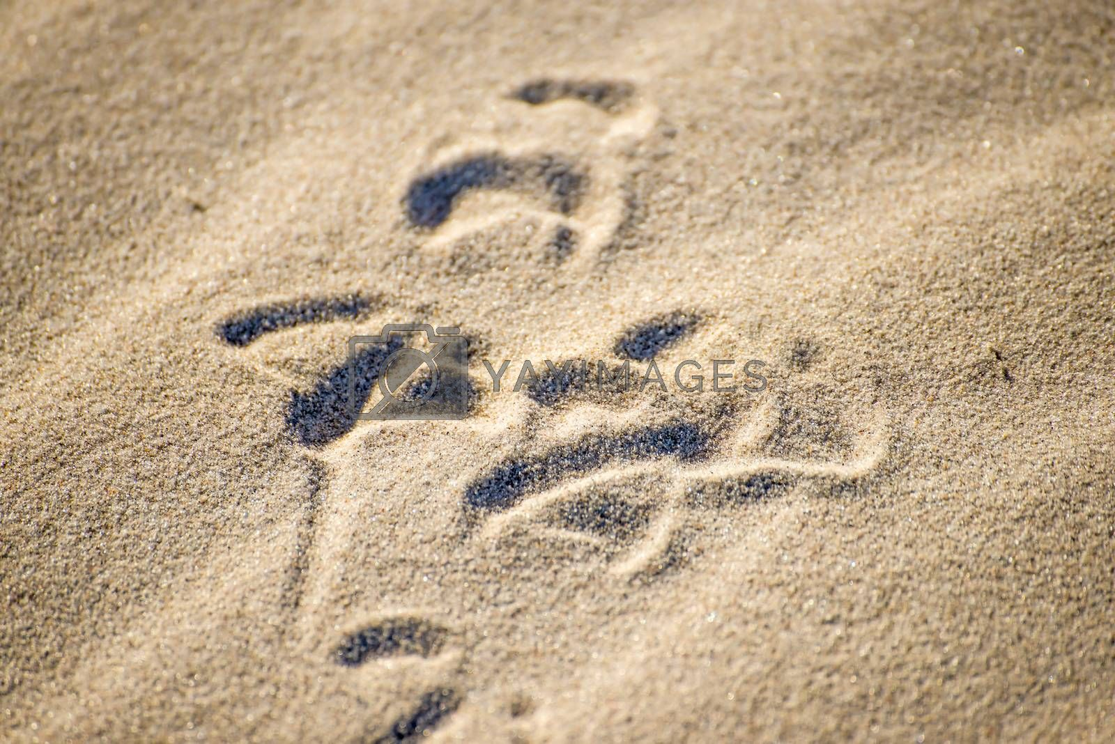 gull tracks in sand by bremse