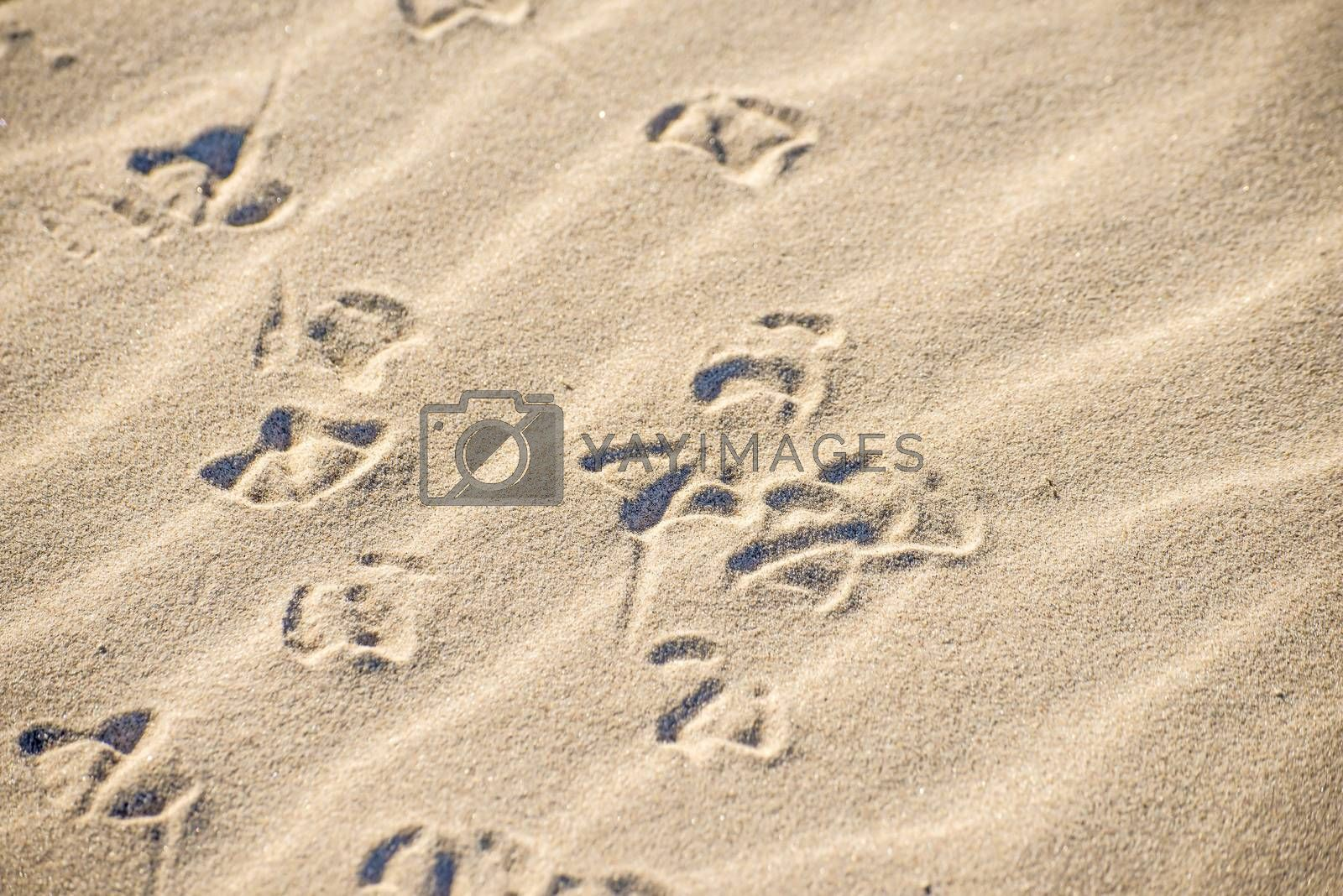 gull tracks in sand