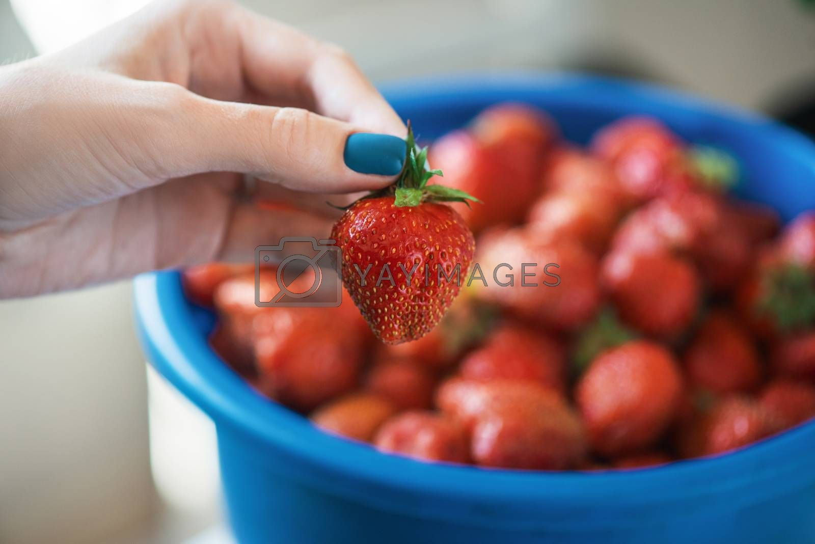A bucket of ripe delicious strawberries, and woman hand hold berry