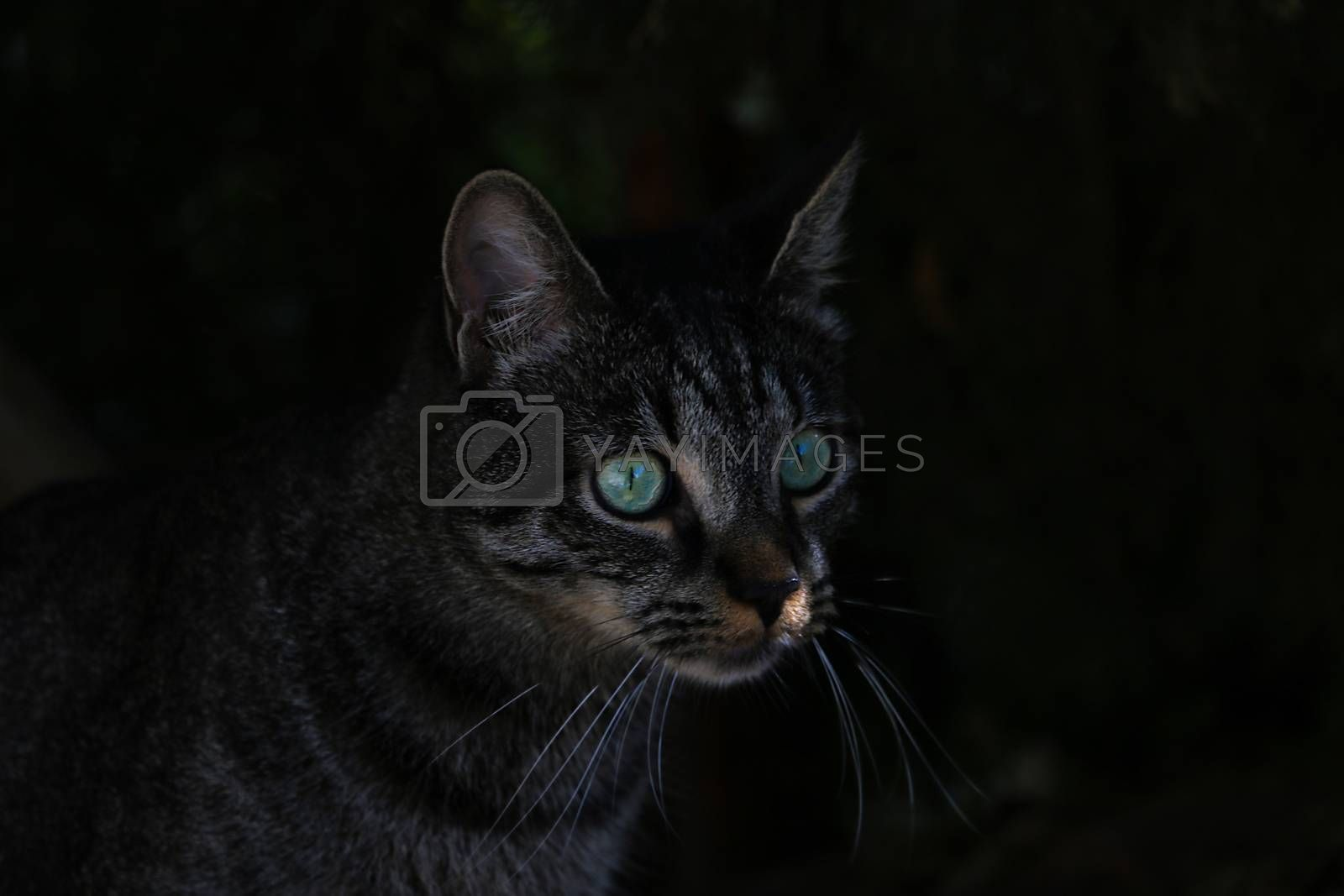 Beautiful cat with green eyes in the dark. by kip02kas