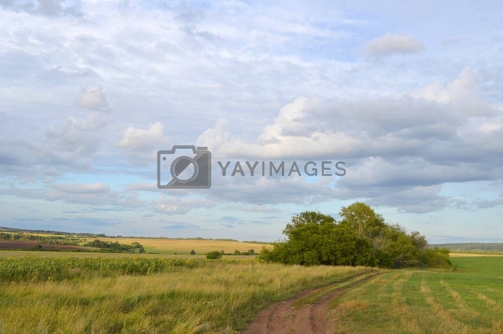 summer landscape with rural road and plants by sergpet