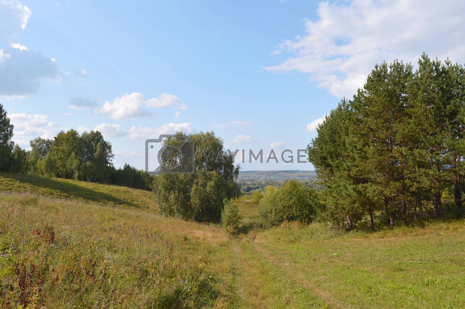 summer landscape with rural road and plants