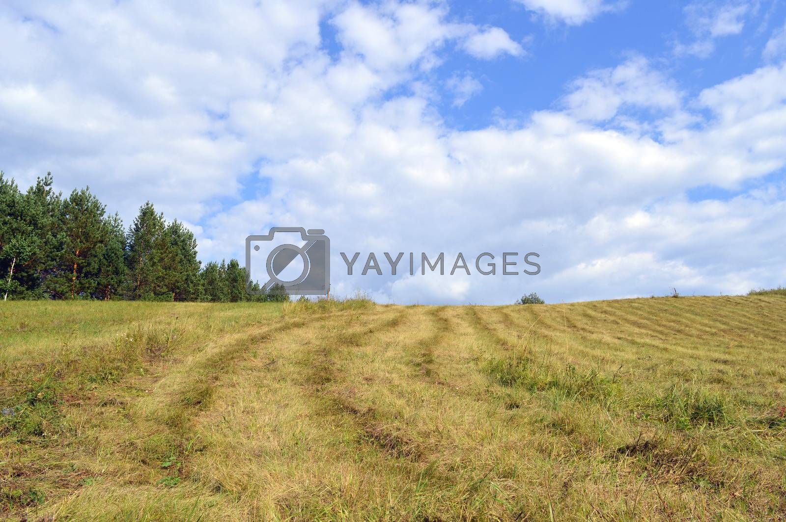 summer rural landscape with plants