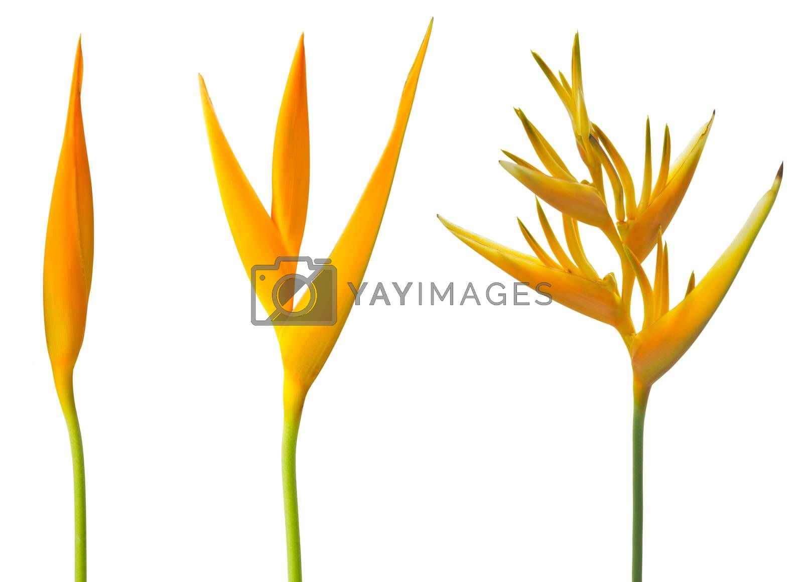 Flowers by krailurk