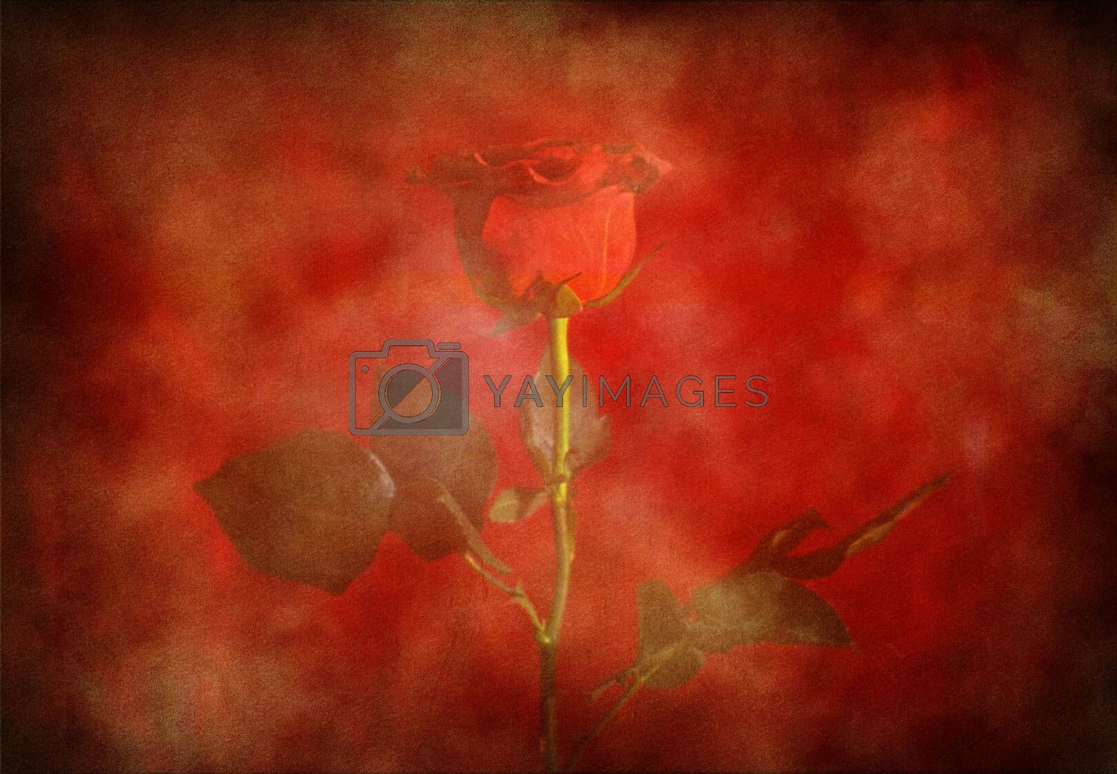 Symbolic composition with red rose flower