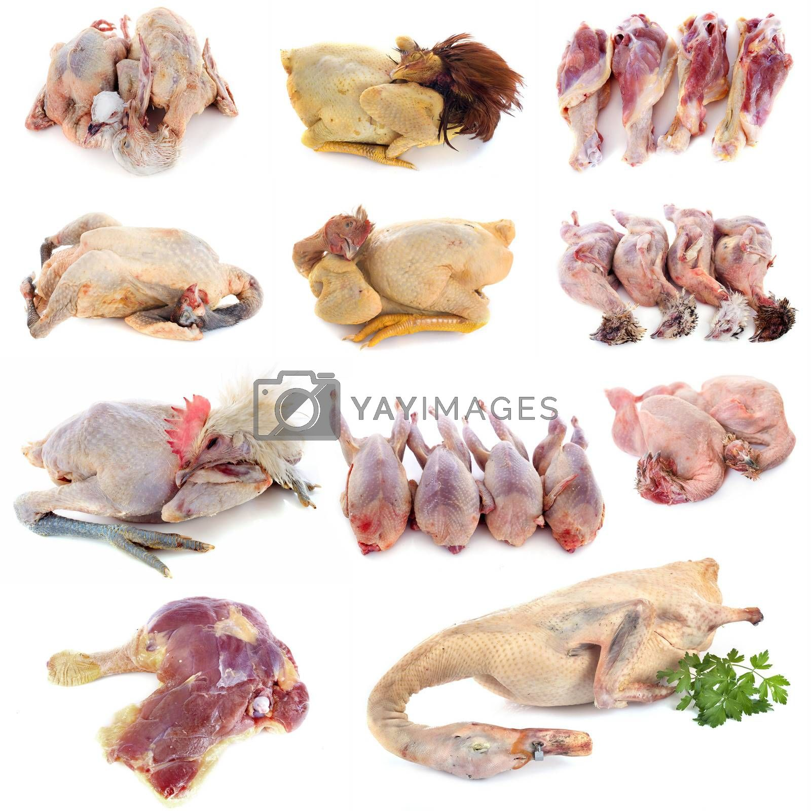 poultry meat in front of white background