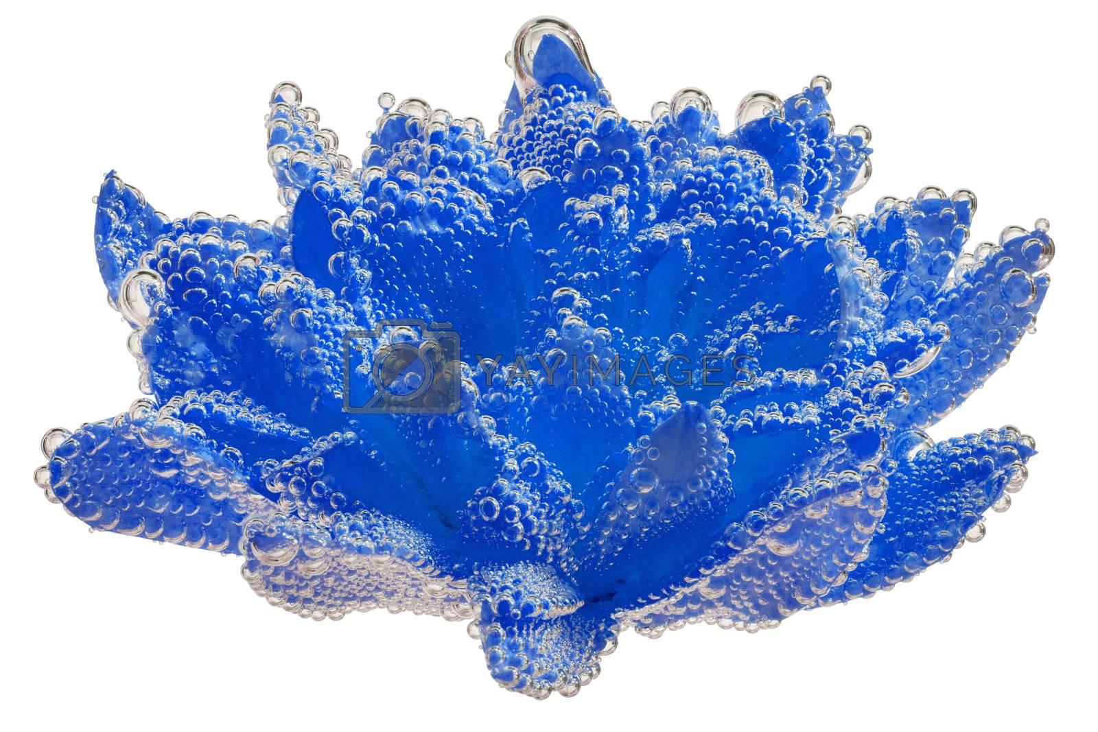 phantom blue chrysanthemum coverd by air bubbles underwater on white background