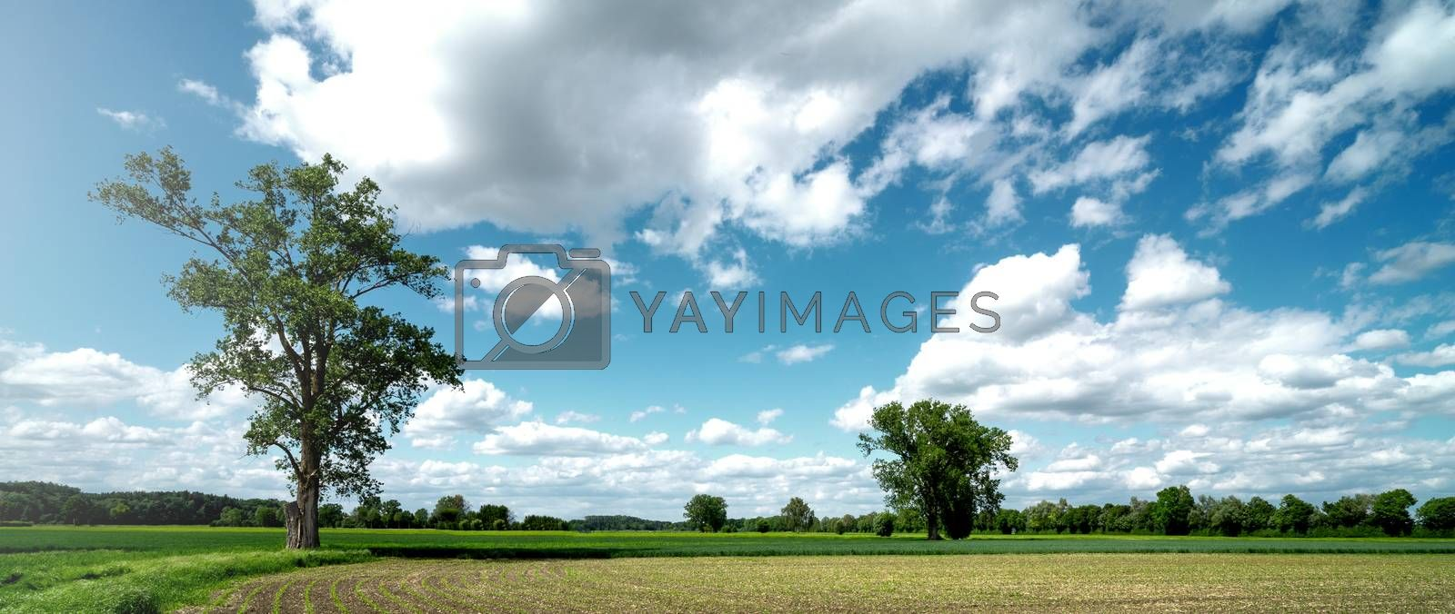 Beautiful and quiet nature view in bright sunny summer light. Natural grass in the country and hiking in nature. two trees with blue sky cloudy