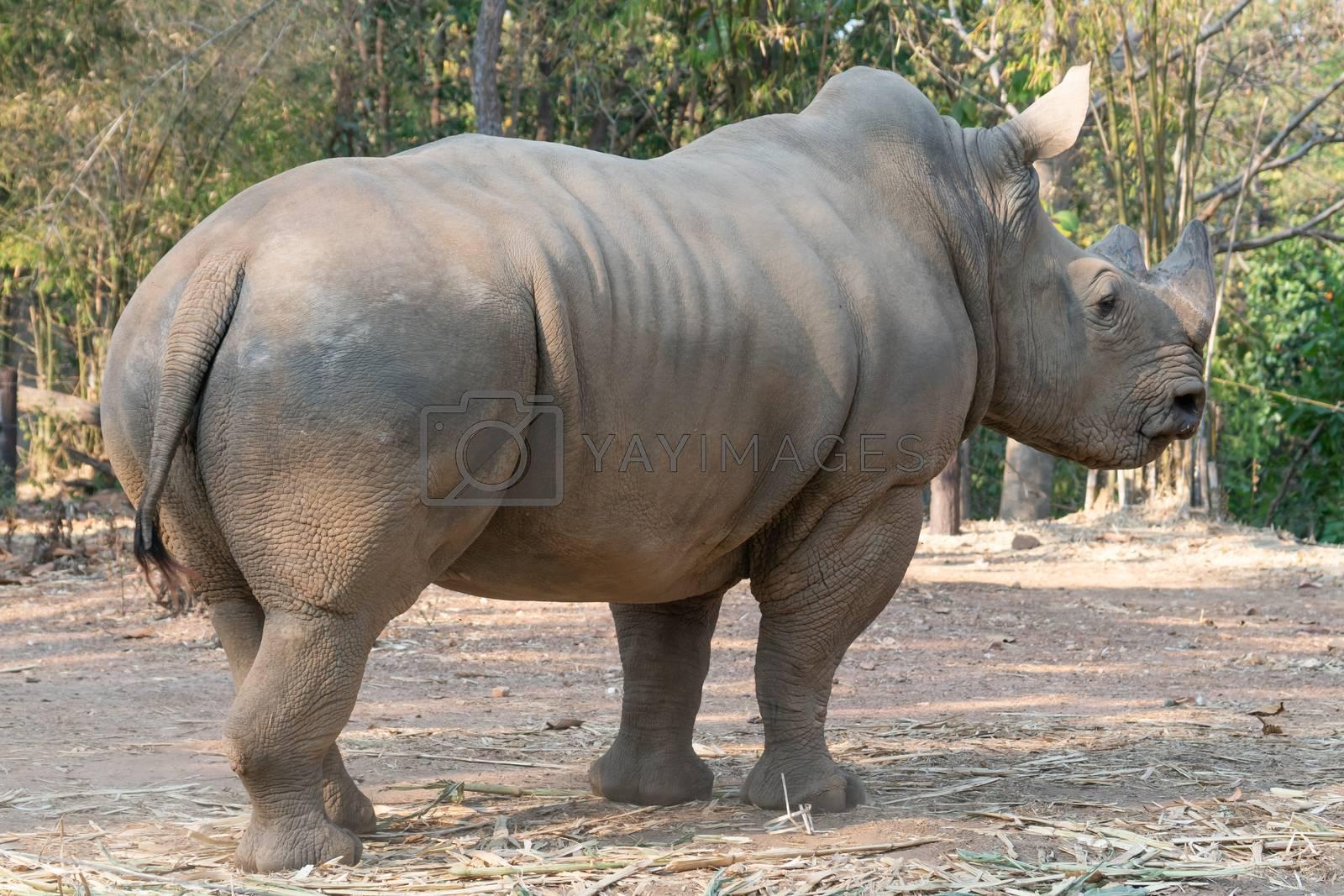 white rhinoceros standing in zoo