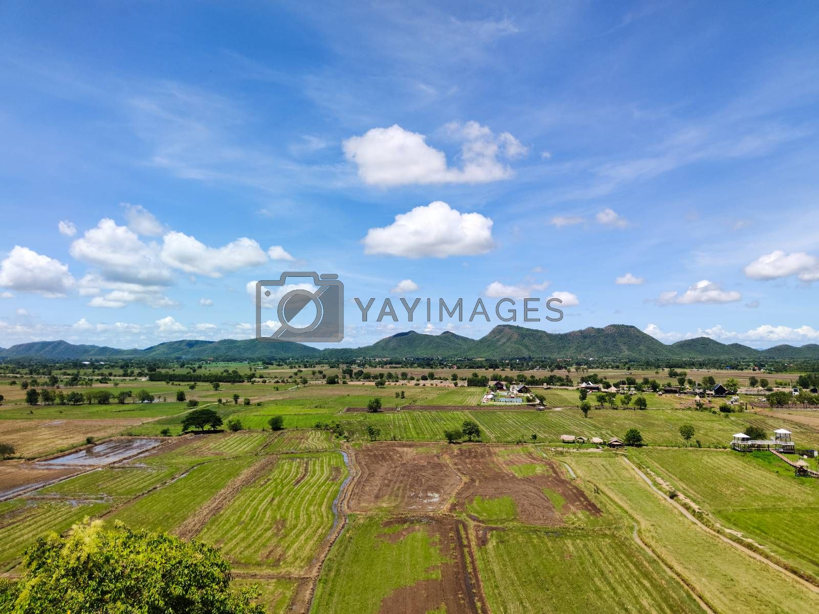 beautiful landscape of rice fields in countryside of Thailand