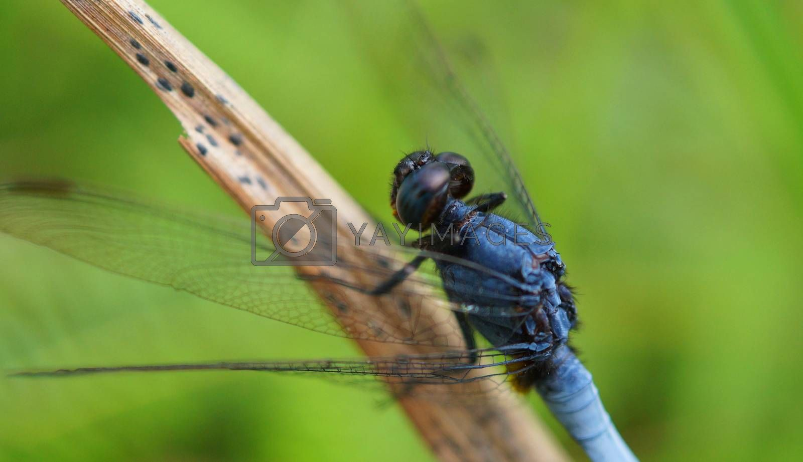 beautiful dragon-fly sits on the leaf of a tree, selective focus image.