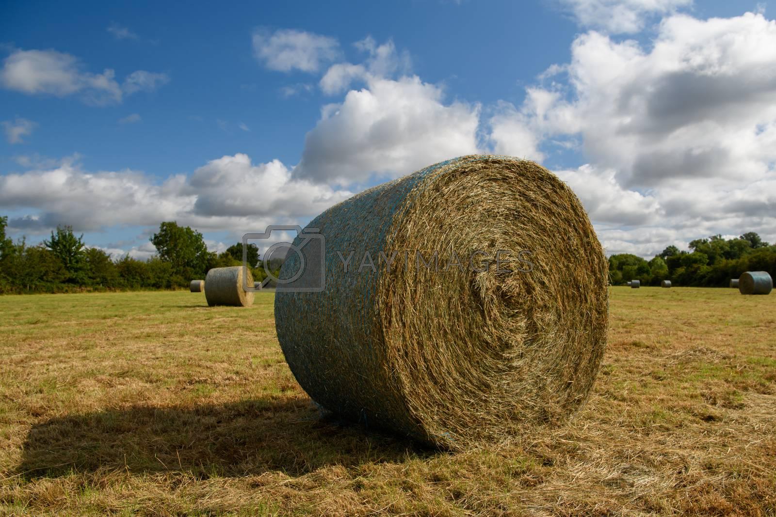 Freshly cut Hay bail in a meadow in England