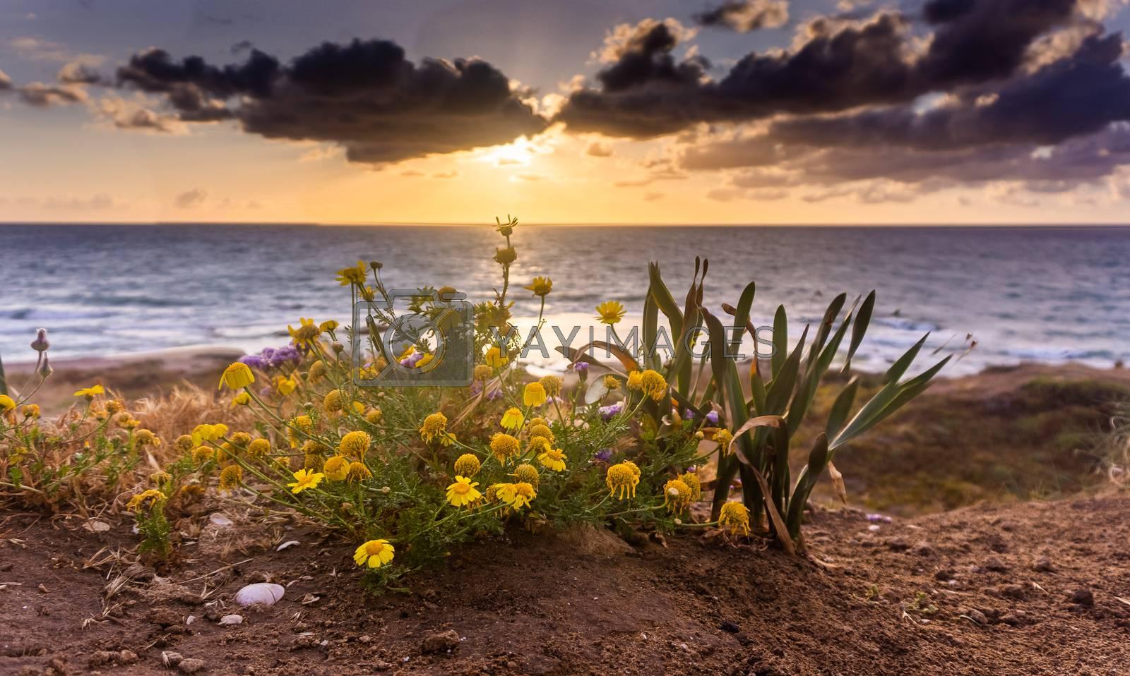Flowers on mediterranean beach in sunset sea view by javax