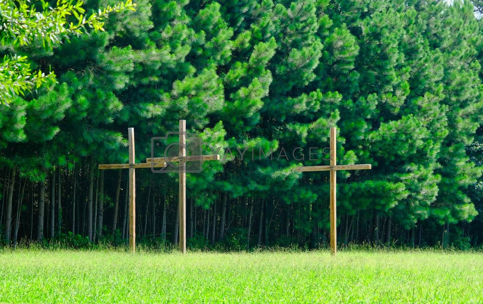 Three Wood Crosses by Green PIne Trees Over Grass Lawn