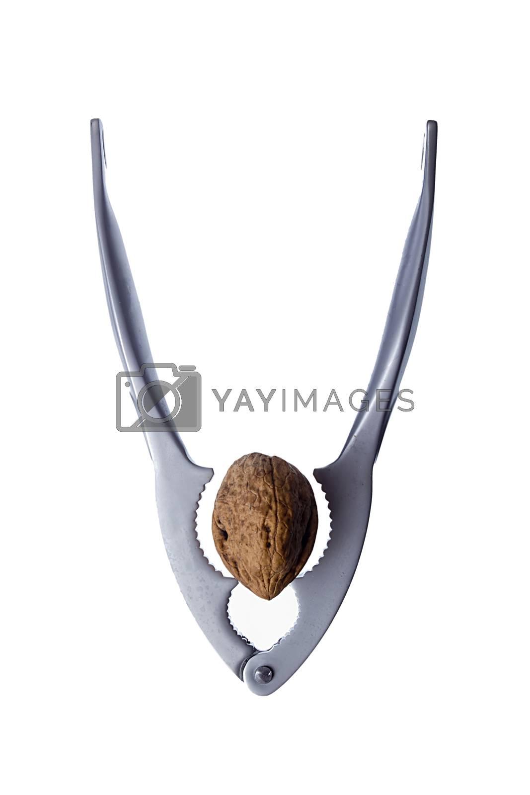 Steel nutcracker and walnut on white background