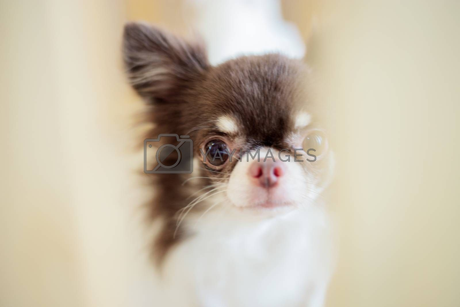 Dog in a cage of wood with blur background.