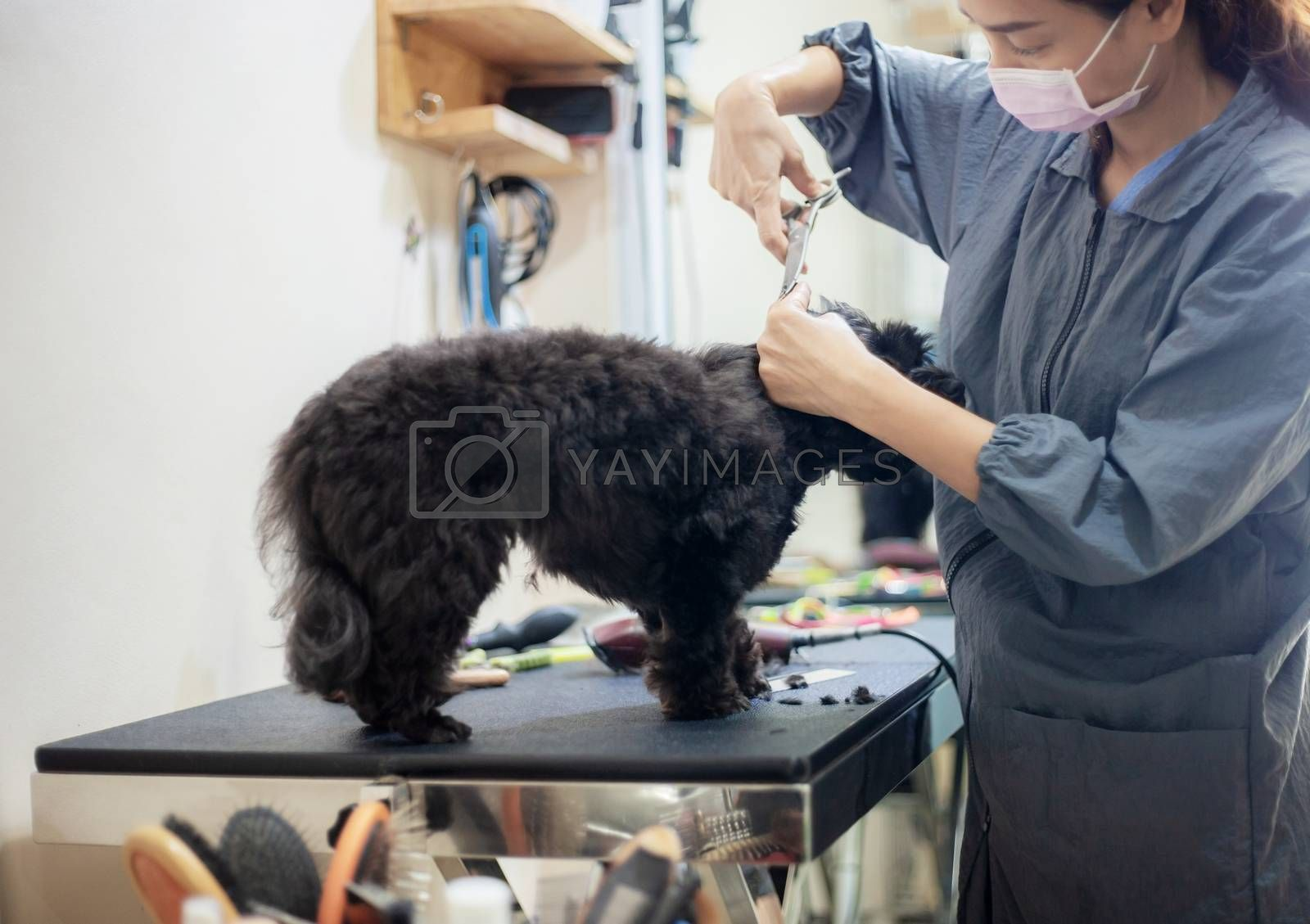 Woman are cutting hair a dog in pet shop.