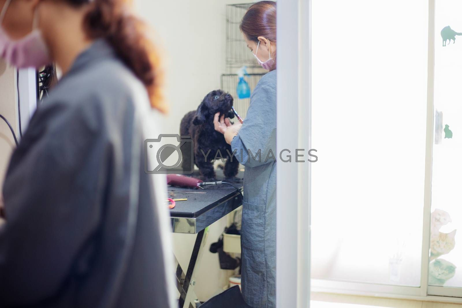 Woman are cutting hair and cleaning a dog.