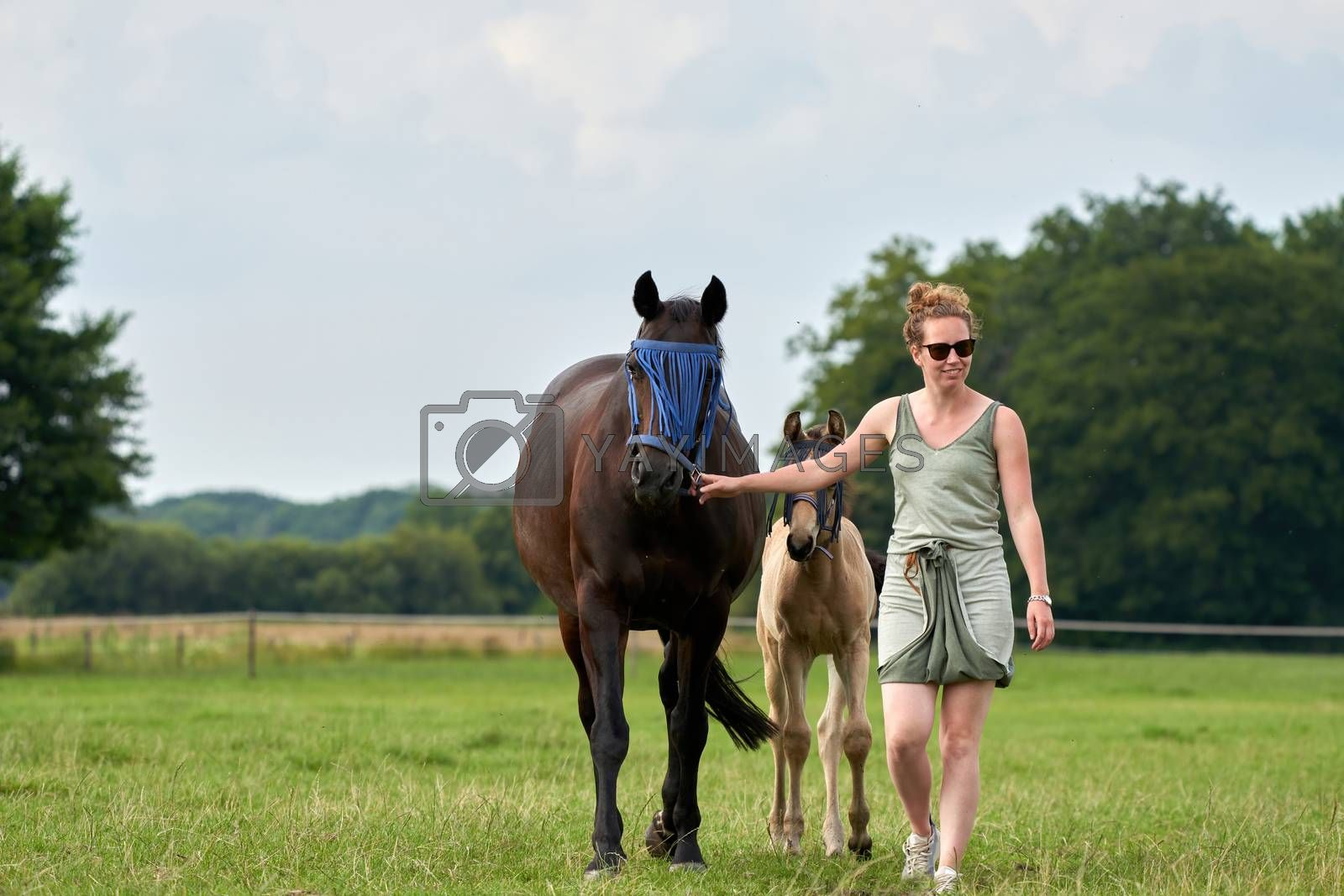 A falcon color foal and a brown mare in the field, with a fly mask on, the woman is holding the mare.