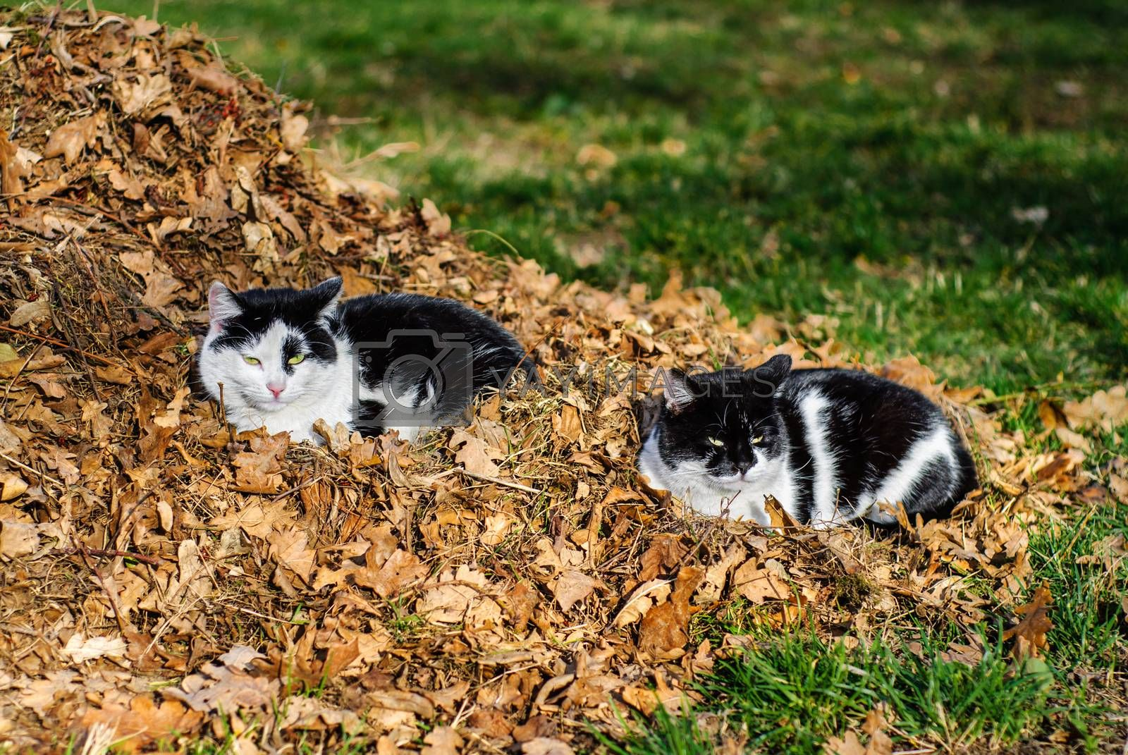 Cat sits on green grass among fallen dry leaves. The last warm days. Autumn.