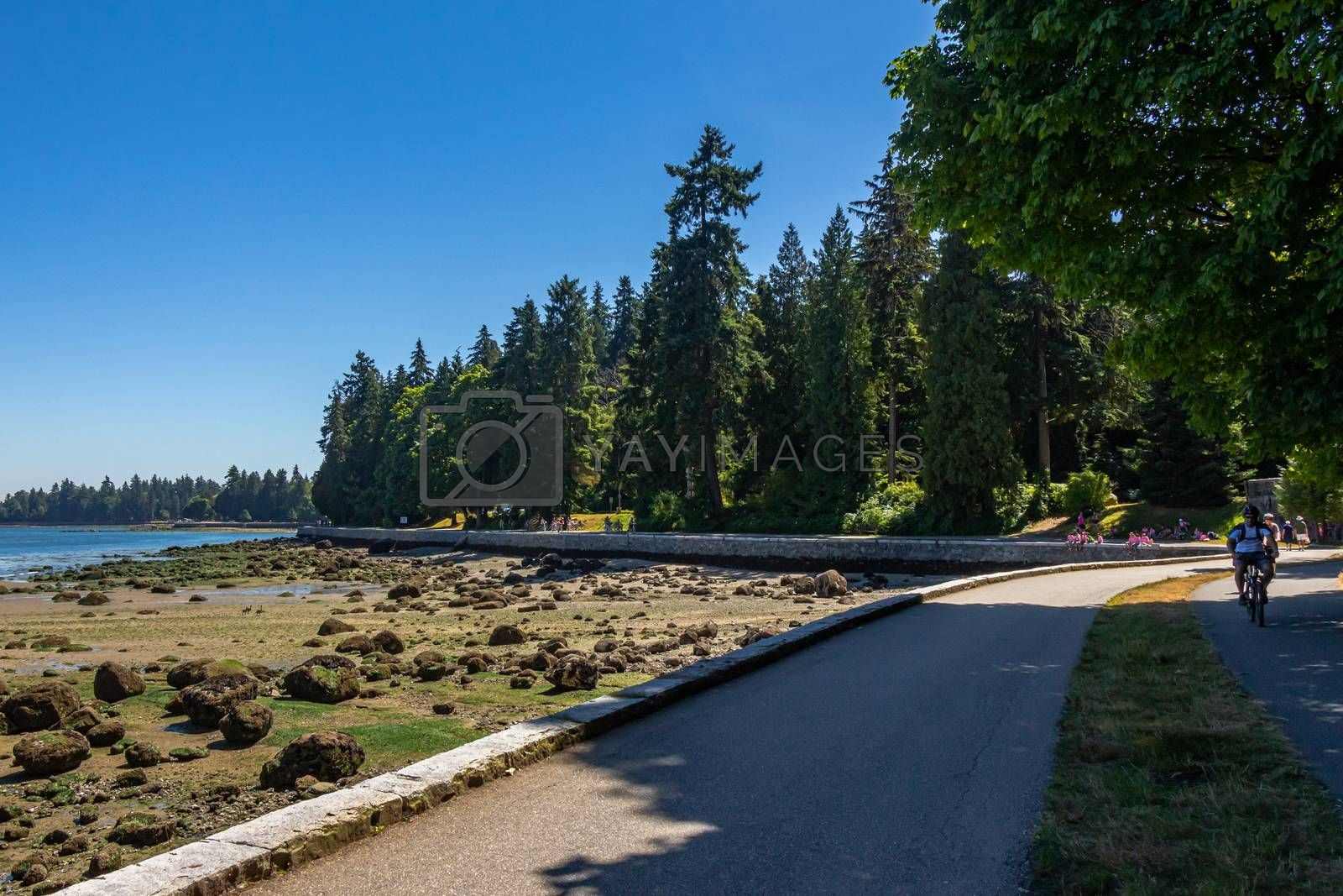 Vancouver, Canada - July 27th 2017: The sea wall in Stanley Park on a summers day at low tide in Coal Harbour, Vancouver