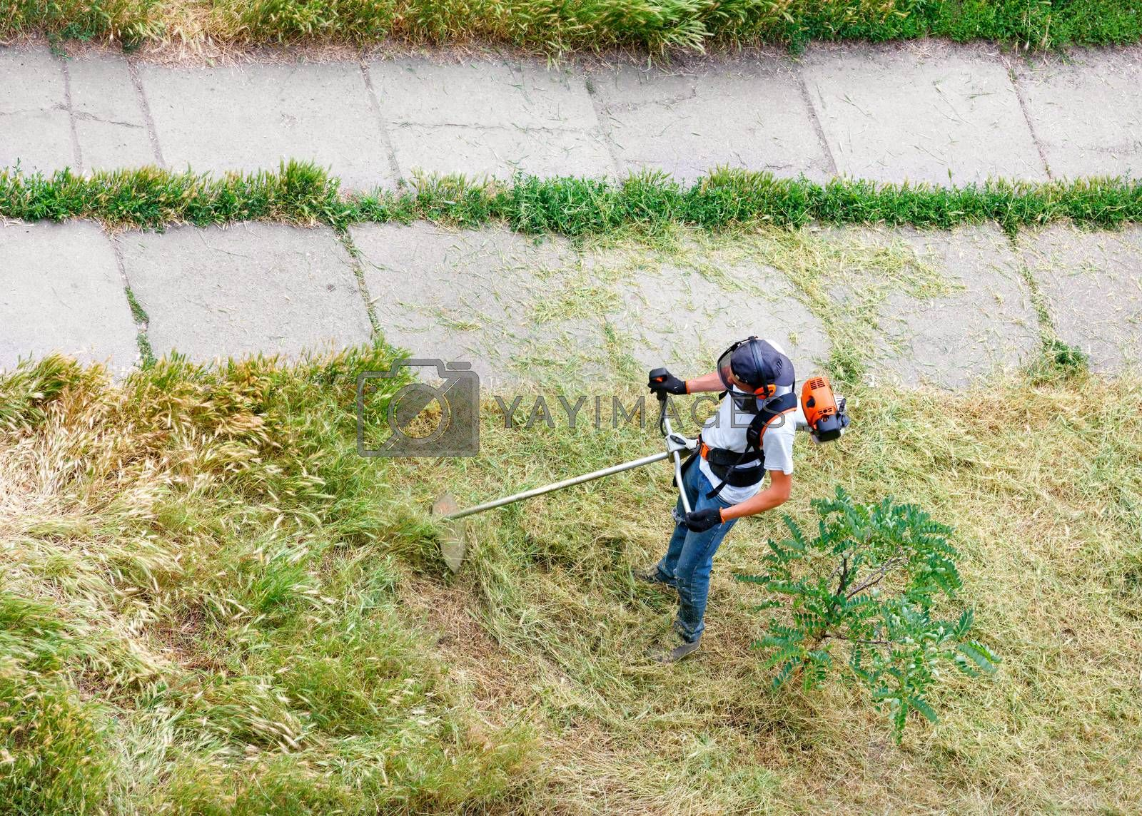 A service worker with a petrol industrial trimmer mows tall grass on the lawn of a city park along a pedestrian walkway. Copy space, top view.