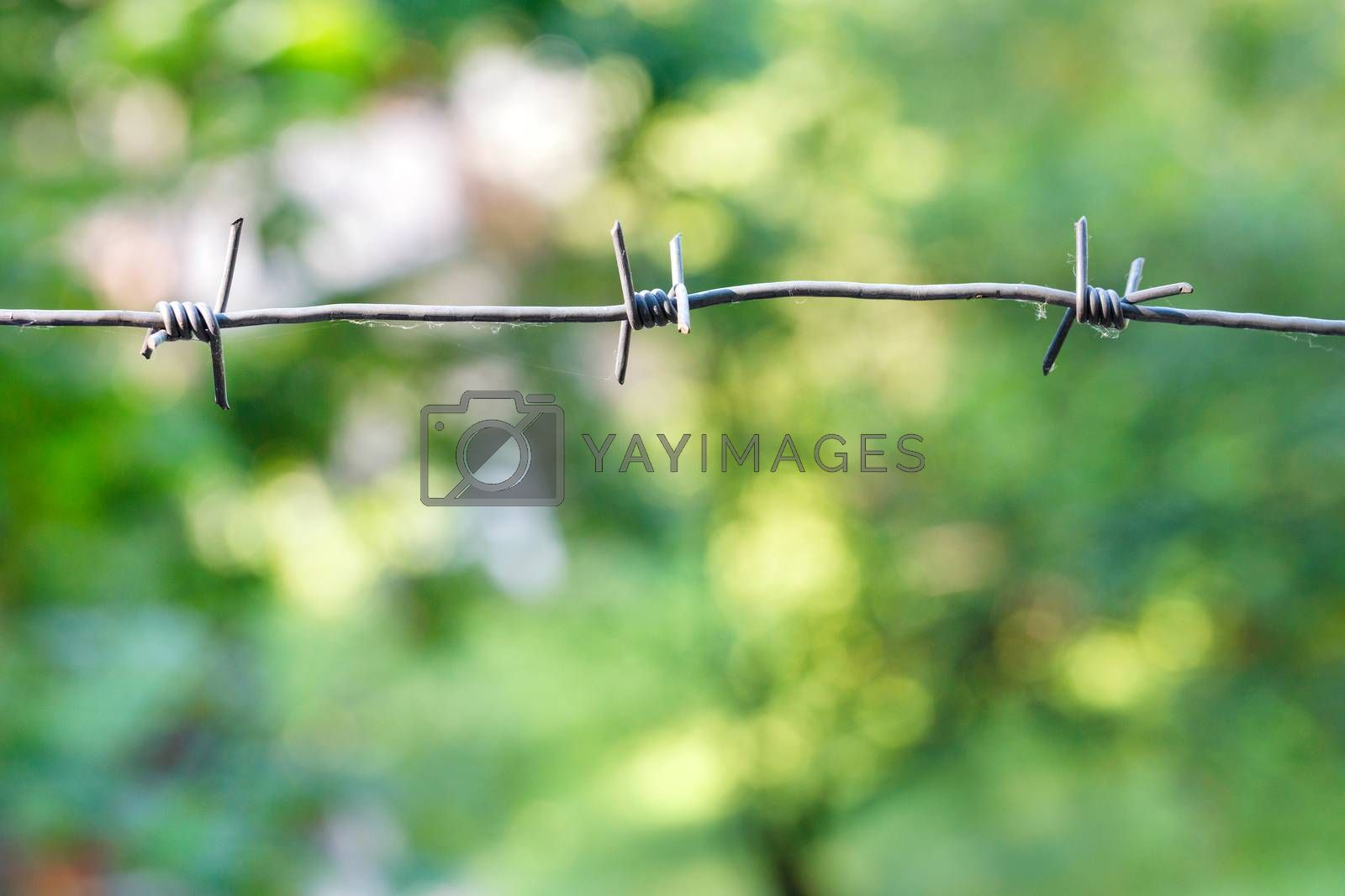 Stretched barbed wire on a light green blurred background. Territory protection concept, copy space.